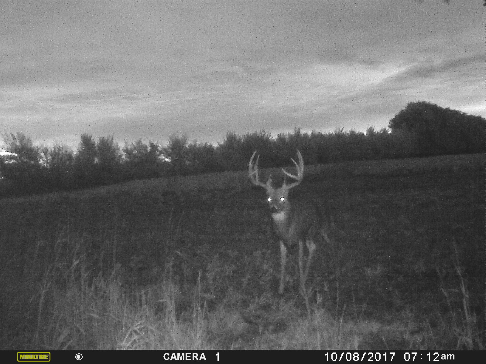 A mature buck can be getting back to bed a little late when the weather conditions are right.