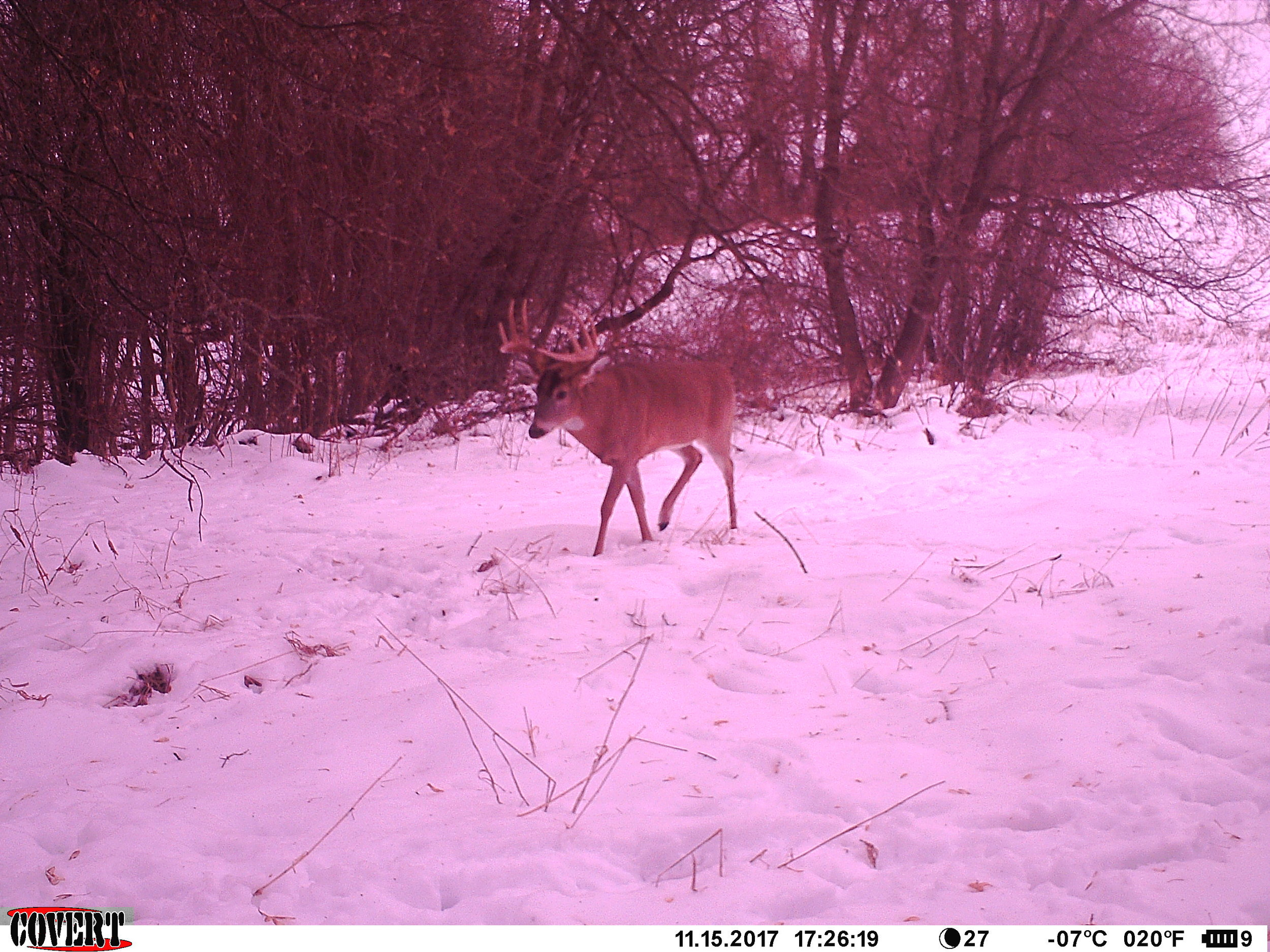 I forgot to turn my camera on, but I believe this was the buck I had at 40 yards on the 18th.