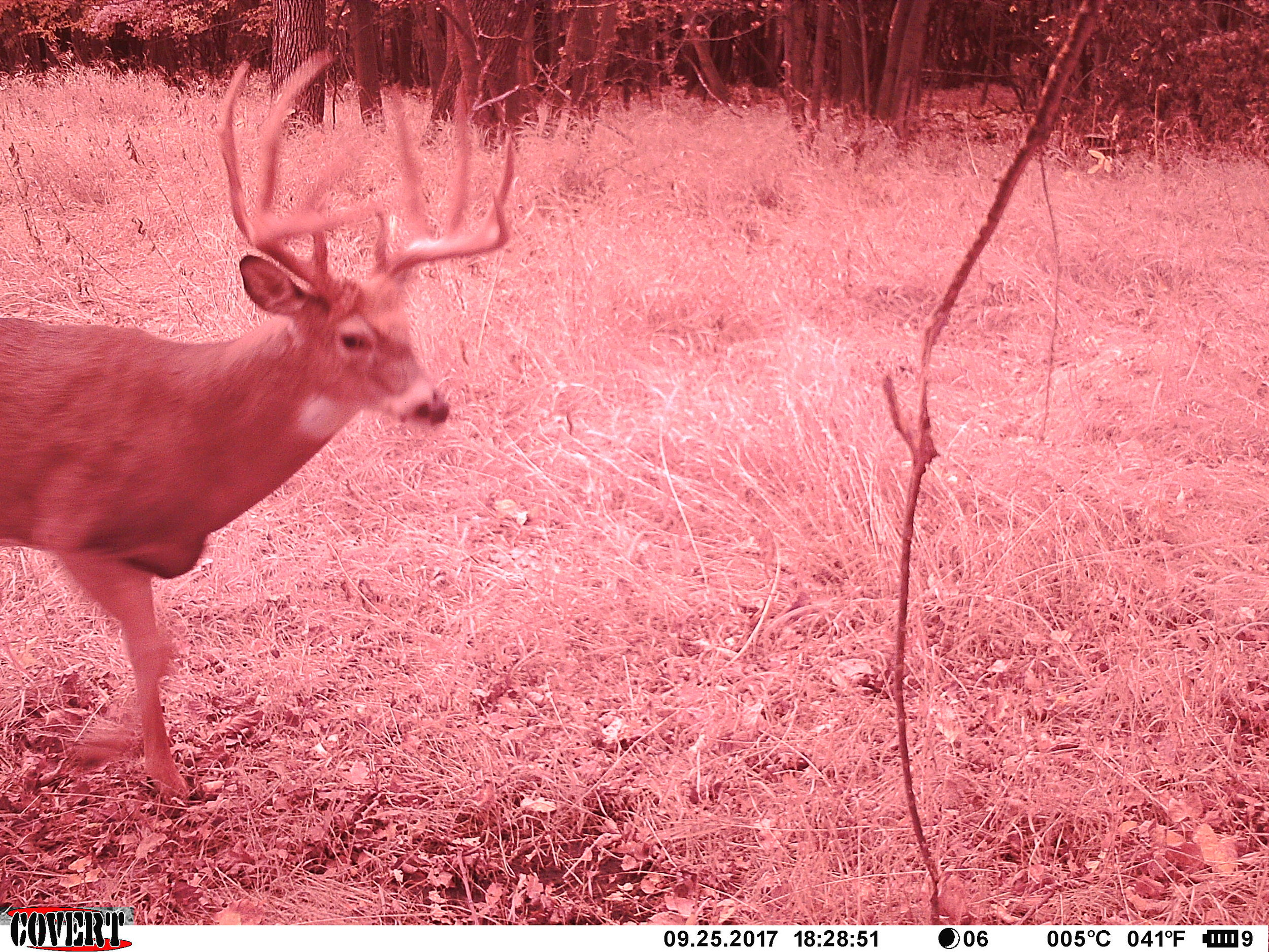 The first cold front of 2017 had Kobe up in daylight 20 yards in front of my stand.