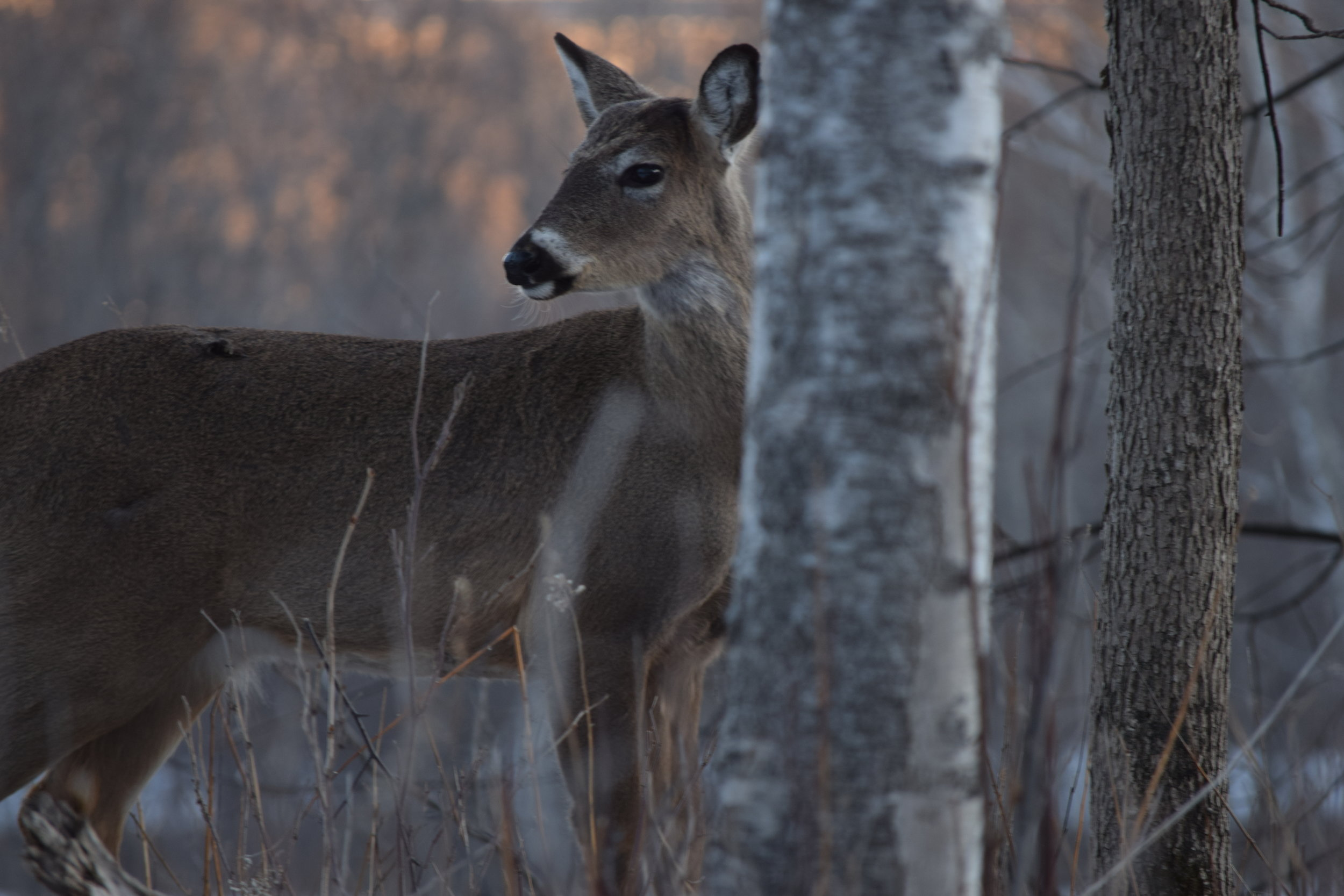 Hunting provides a close connection with the wild that can't be replicated by anything else.