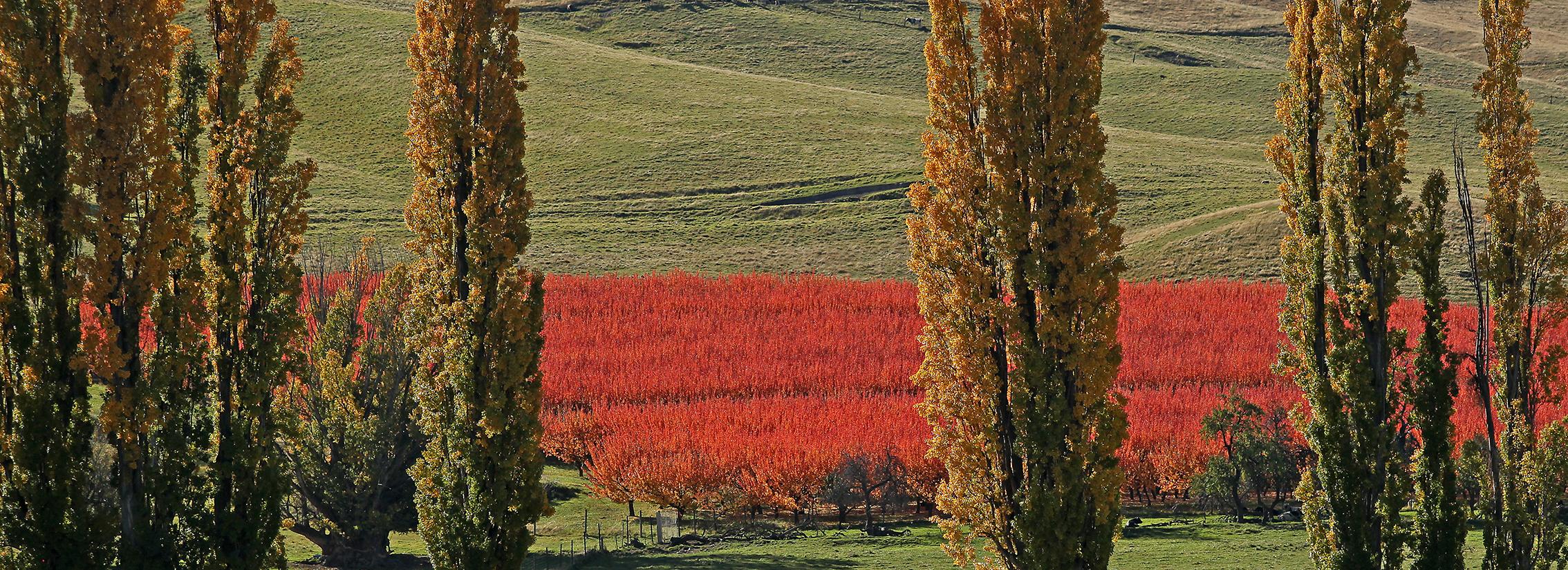 Autumn0666.jpg