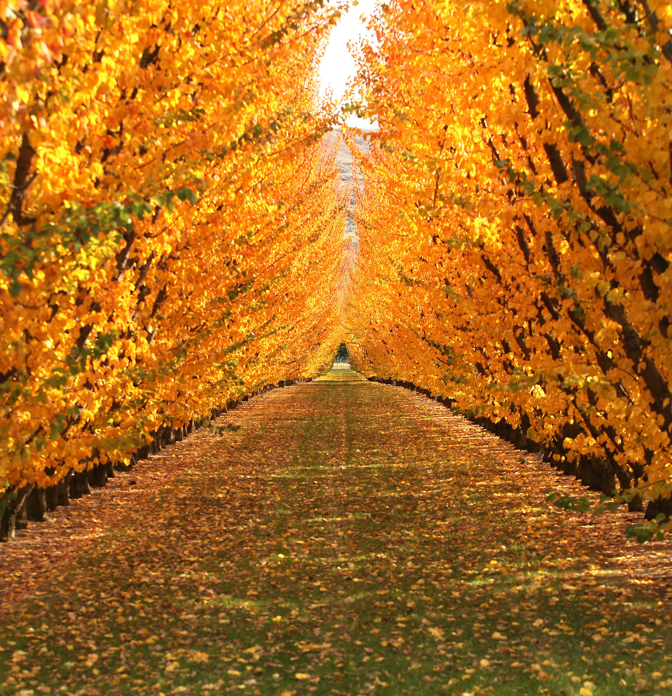 autumn0644.jpg