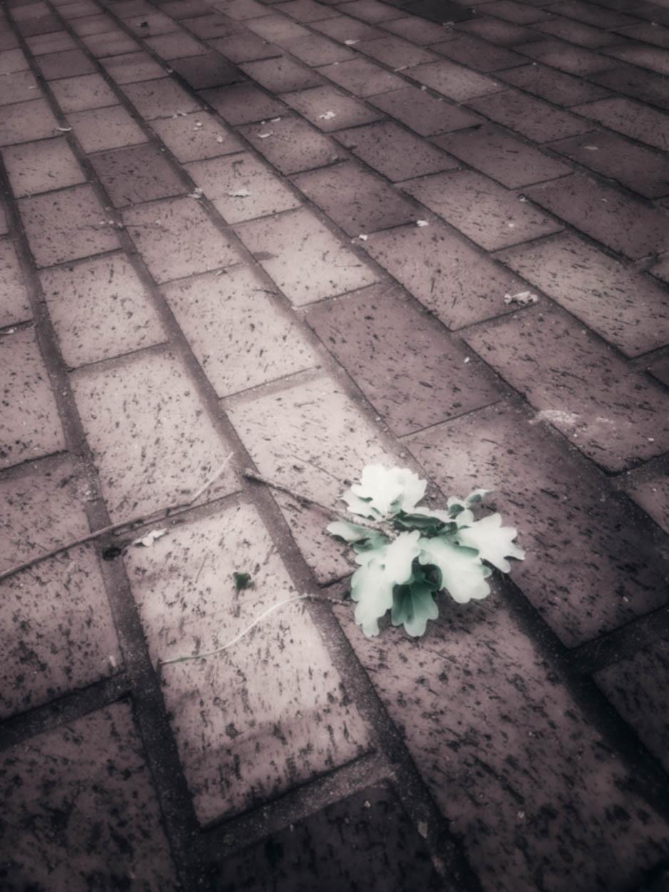 Lonely Branch.BrickSidewalk.LFK-Edit-Edit-1.jpg
