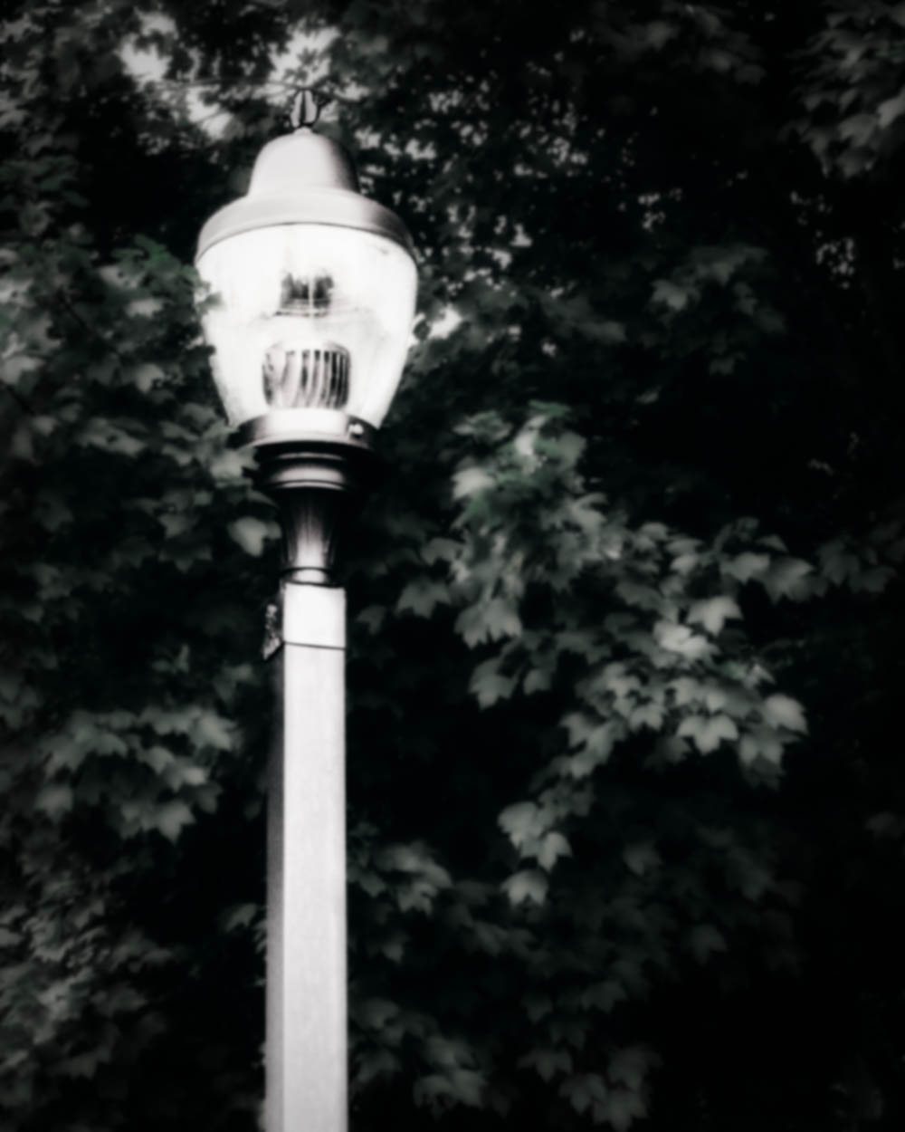 LAMPPOST.Blurry.Monochromatic.Leaves.082419.jpg