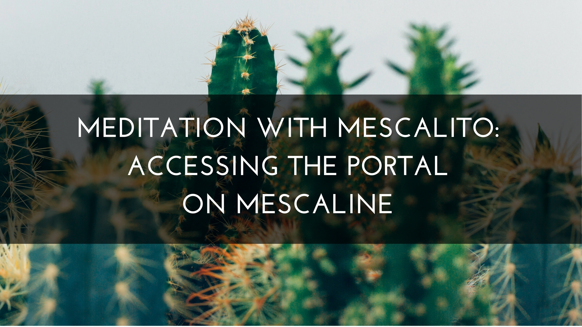 Meditation with Mescalito: Accessing the Portal on Mescaline Medicine Path San Pedro Cactus Peruvian Torch