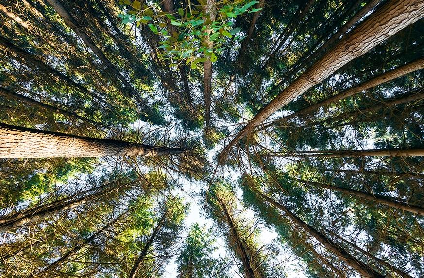 ForestEnterprises2_17.jpg