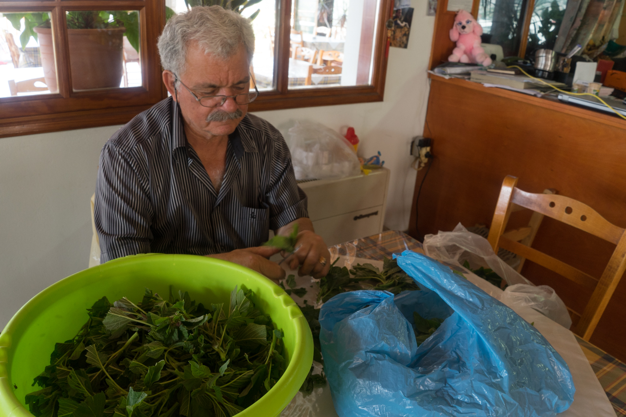 Papa cutting the stems off the local mountain greens.
