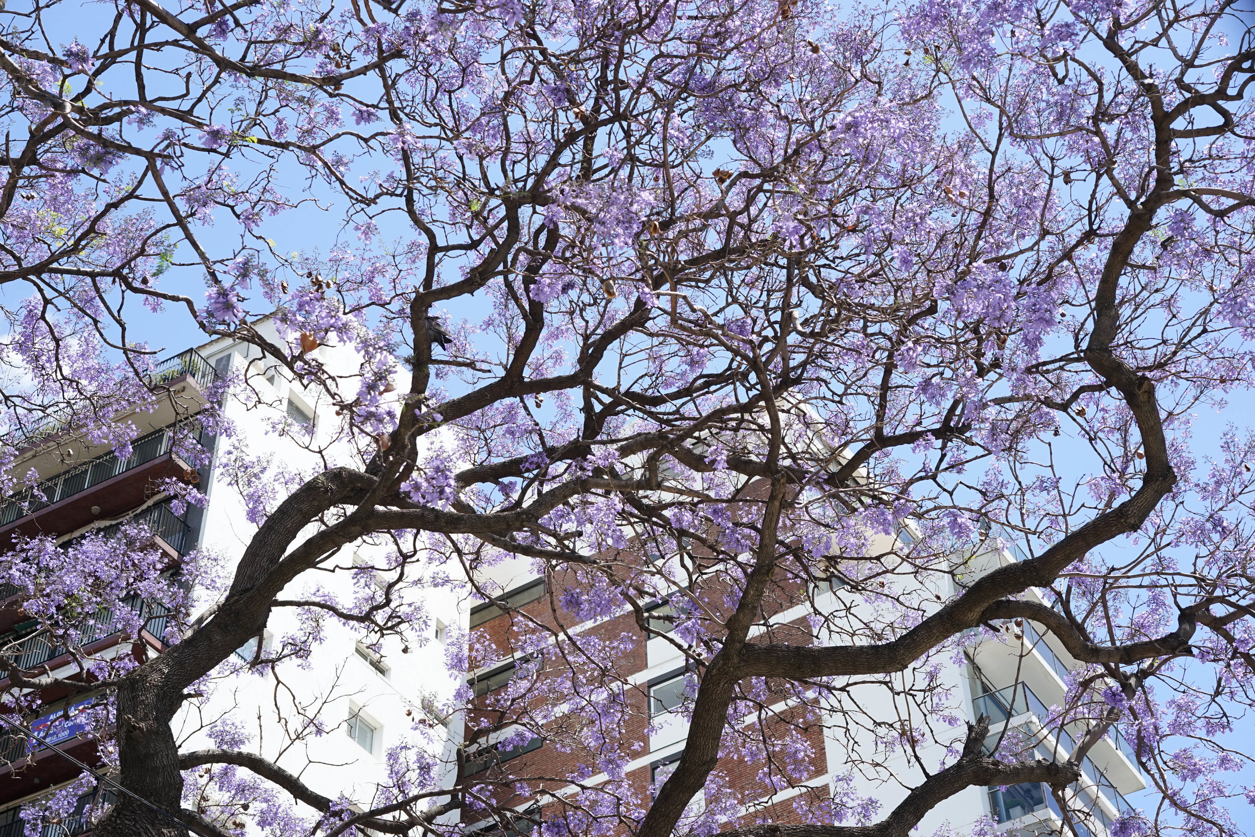 Spring has sprung in the Southern Hemisphere.