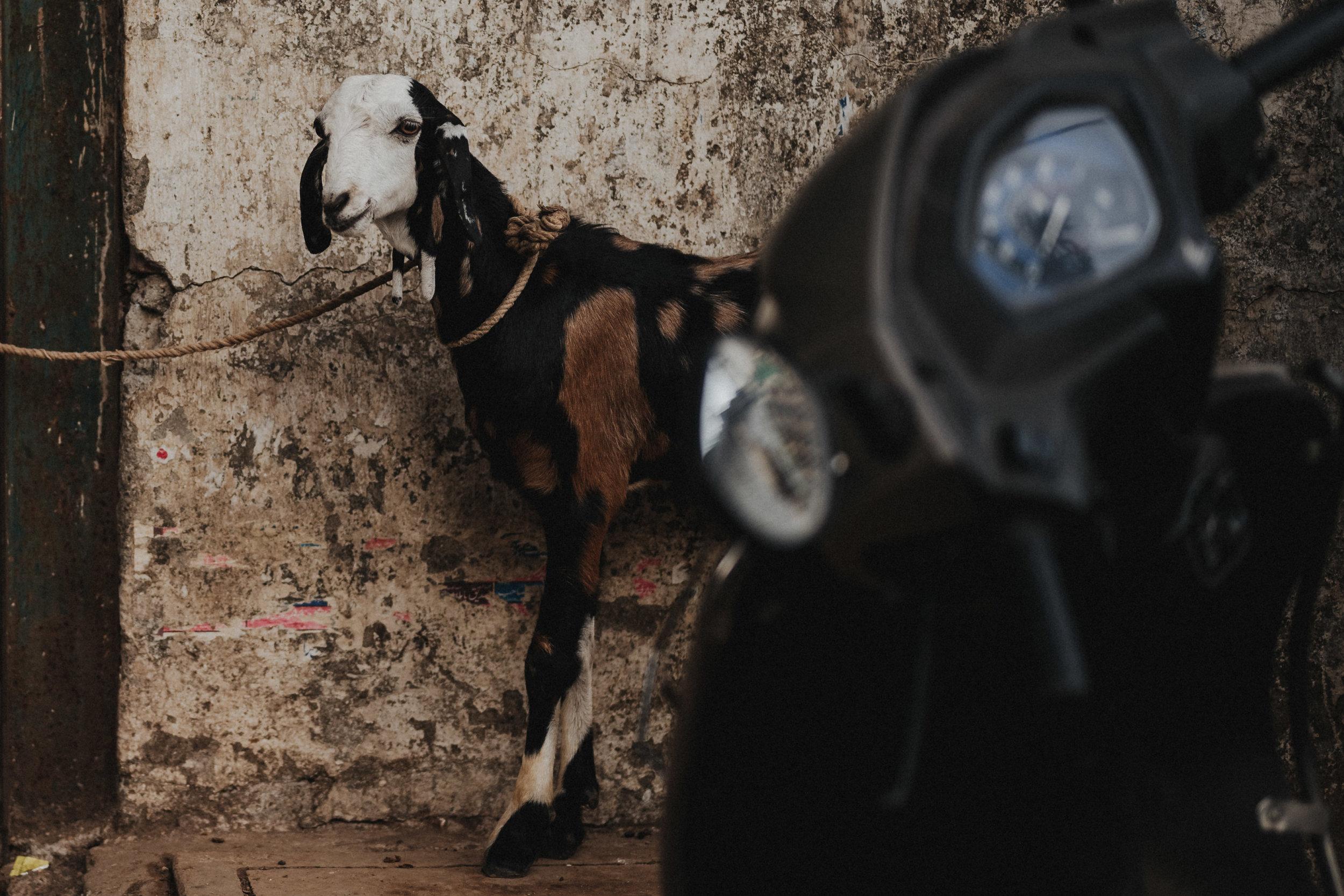 Ziege auf der Strasse in Mumbai Indien