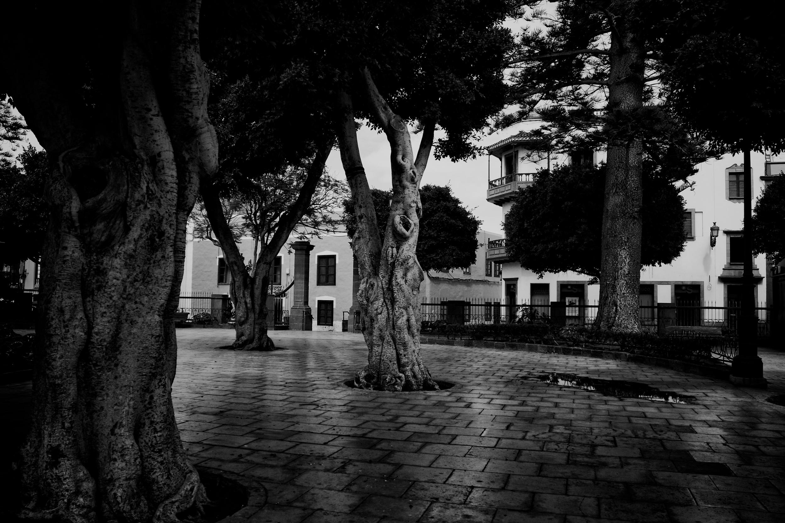 Wise Trees.jpg