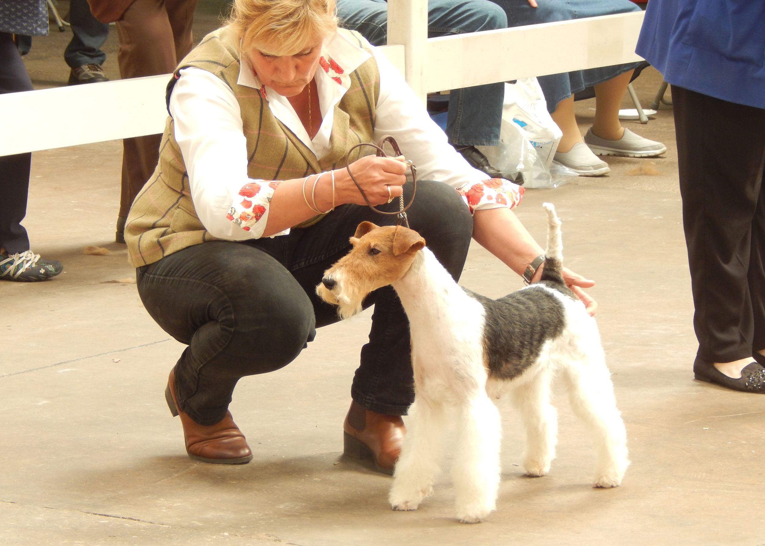 Julie in the ring with Maggie (Shoalhill Miss Bossy Boots) today
