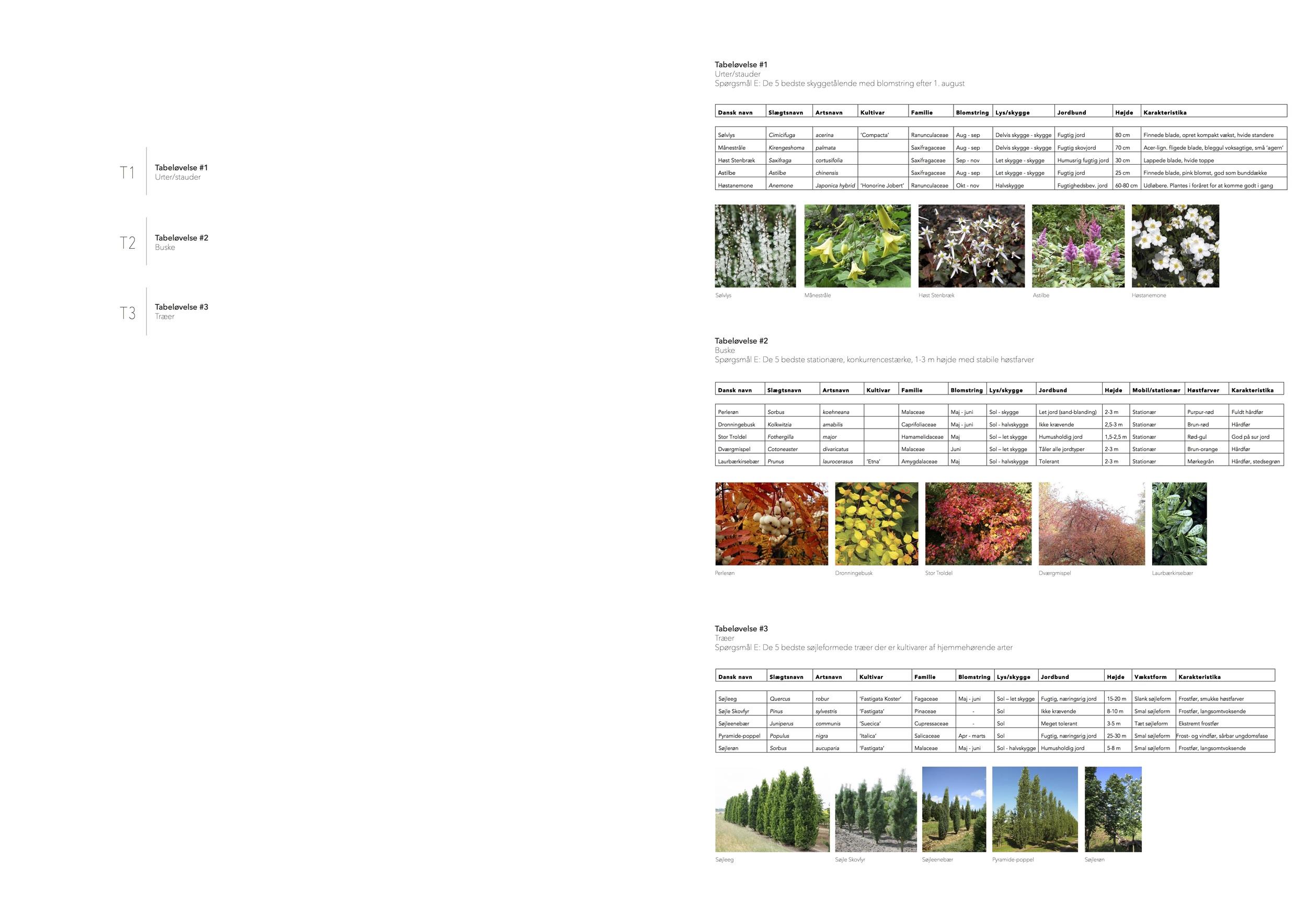 Asrosenvinge_Bep.design_16.jpg