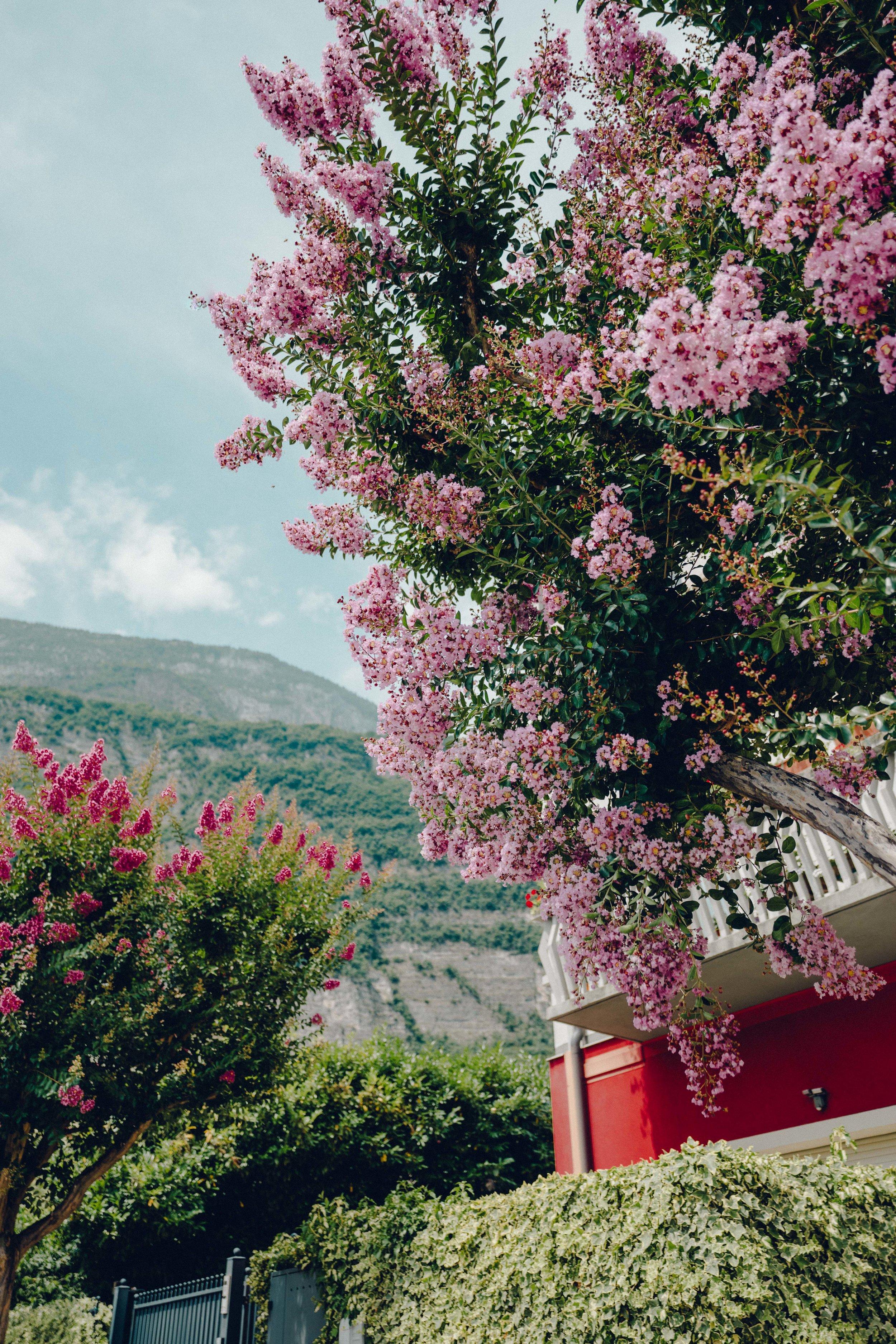 ASROSENVINGE_Italy_Roadtrip_Italy-06630.jpg