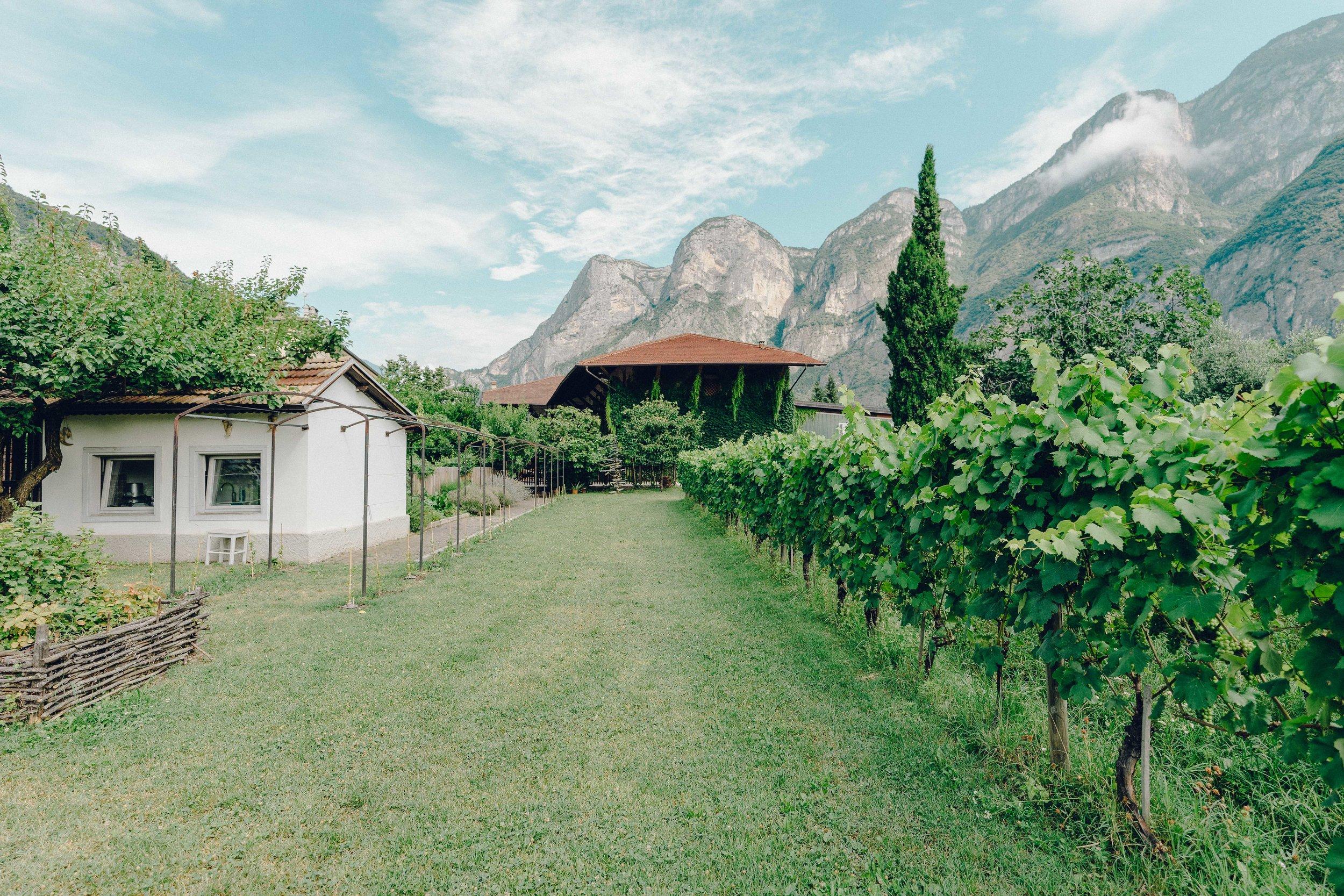 ASROSENVINGE_Roadtrip_Italy_Dolomites_Vineyard_Foradori-06574.jpg