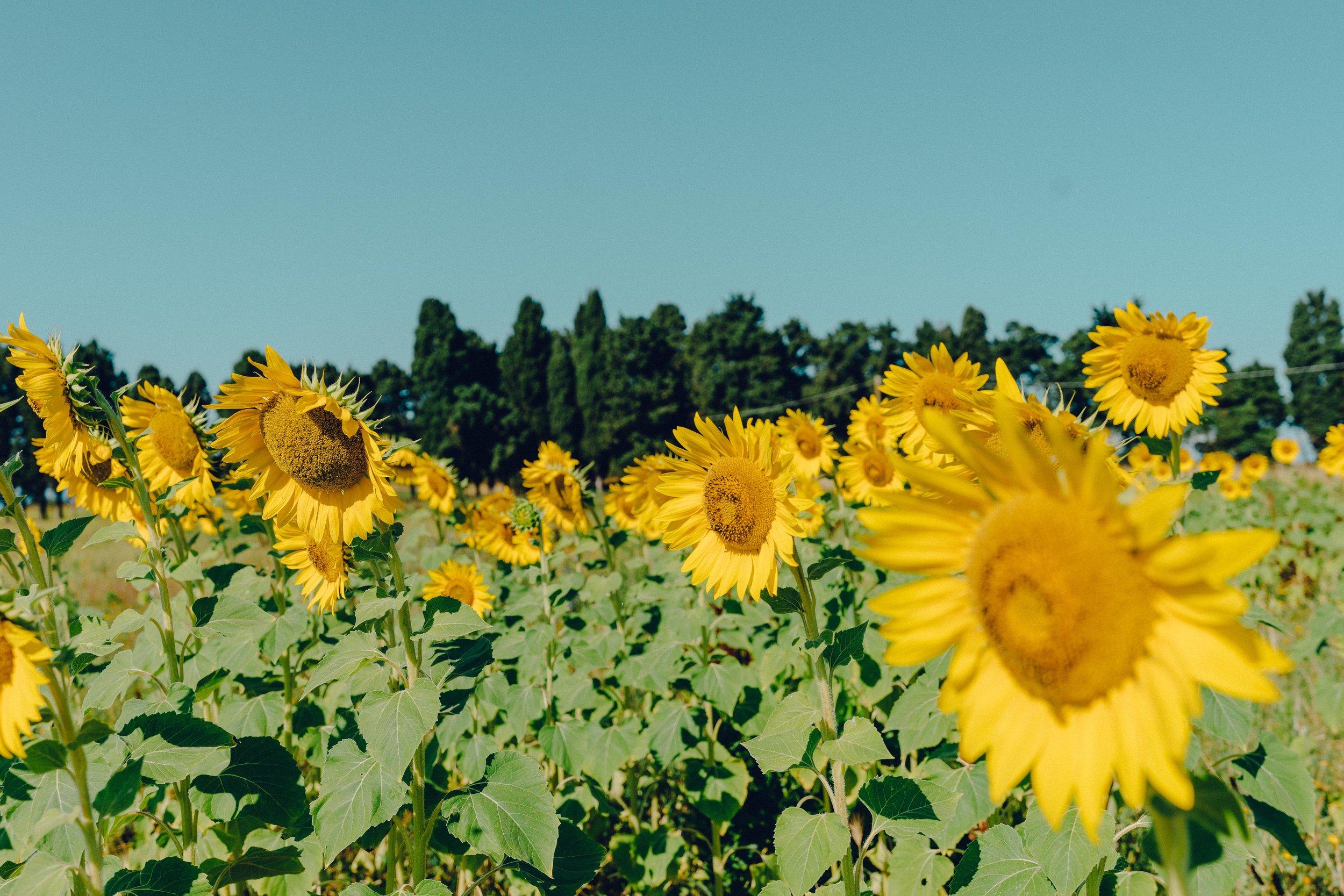 ASROSENVINGE_Roadtrip_Italy_Toscana-07738.jpg