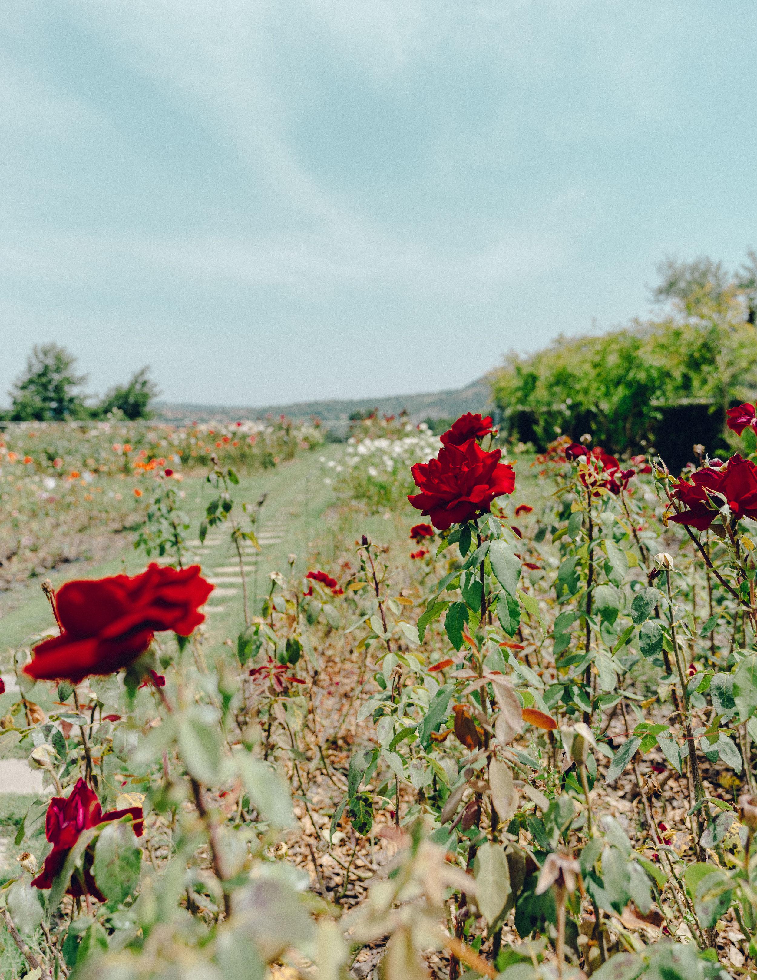 ASROSENVINGE_Roadtrip_Italy_Puglia_Feudi_San_Gregorio-07665.jpg