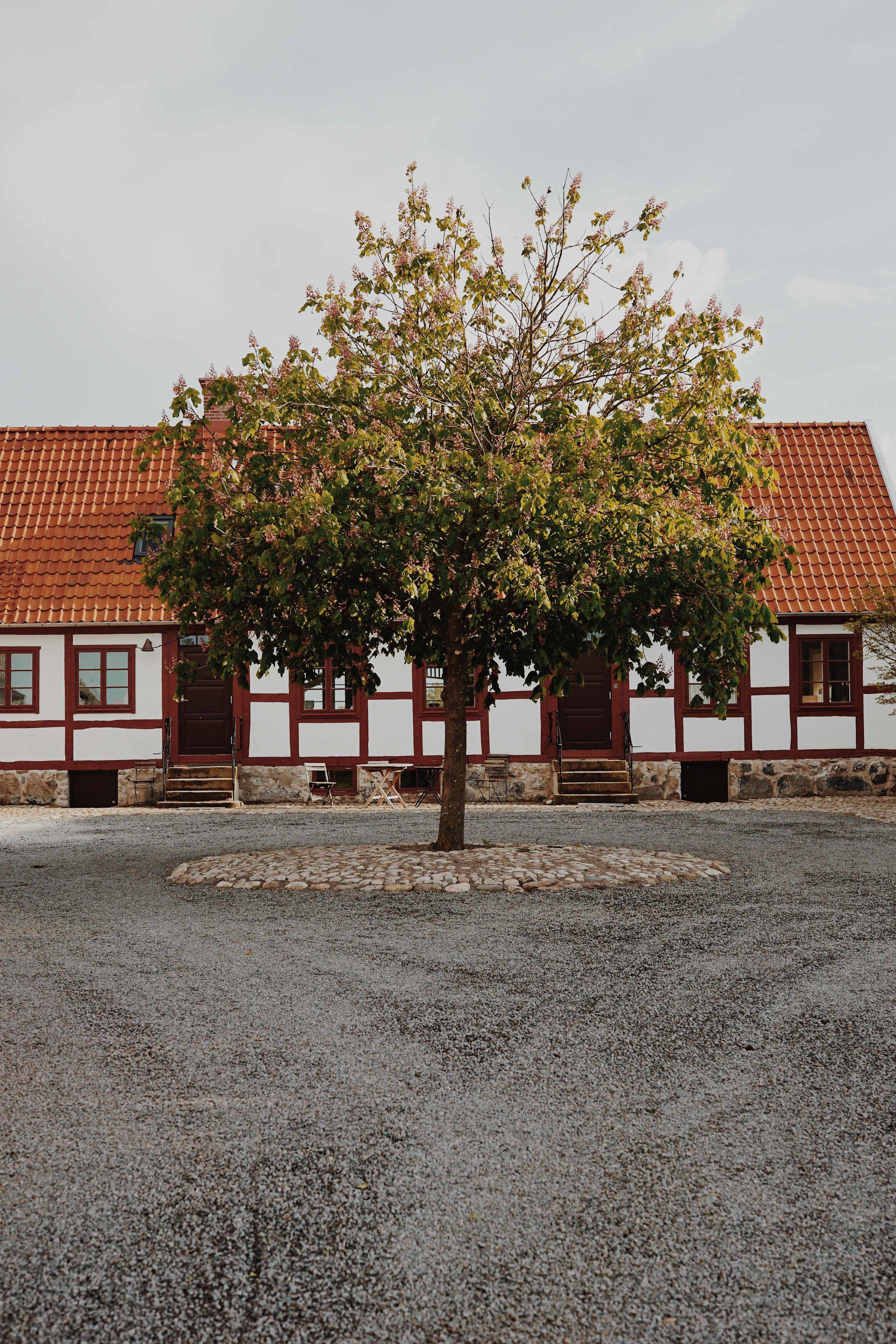 ASROSENVINGE_VisitSkane_Kullabergs_Vingard_Vineyard_LowRes-252.jpg
