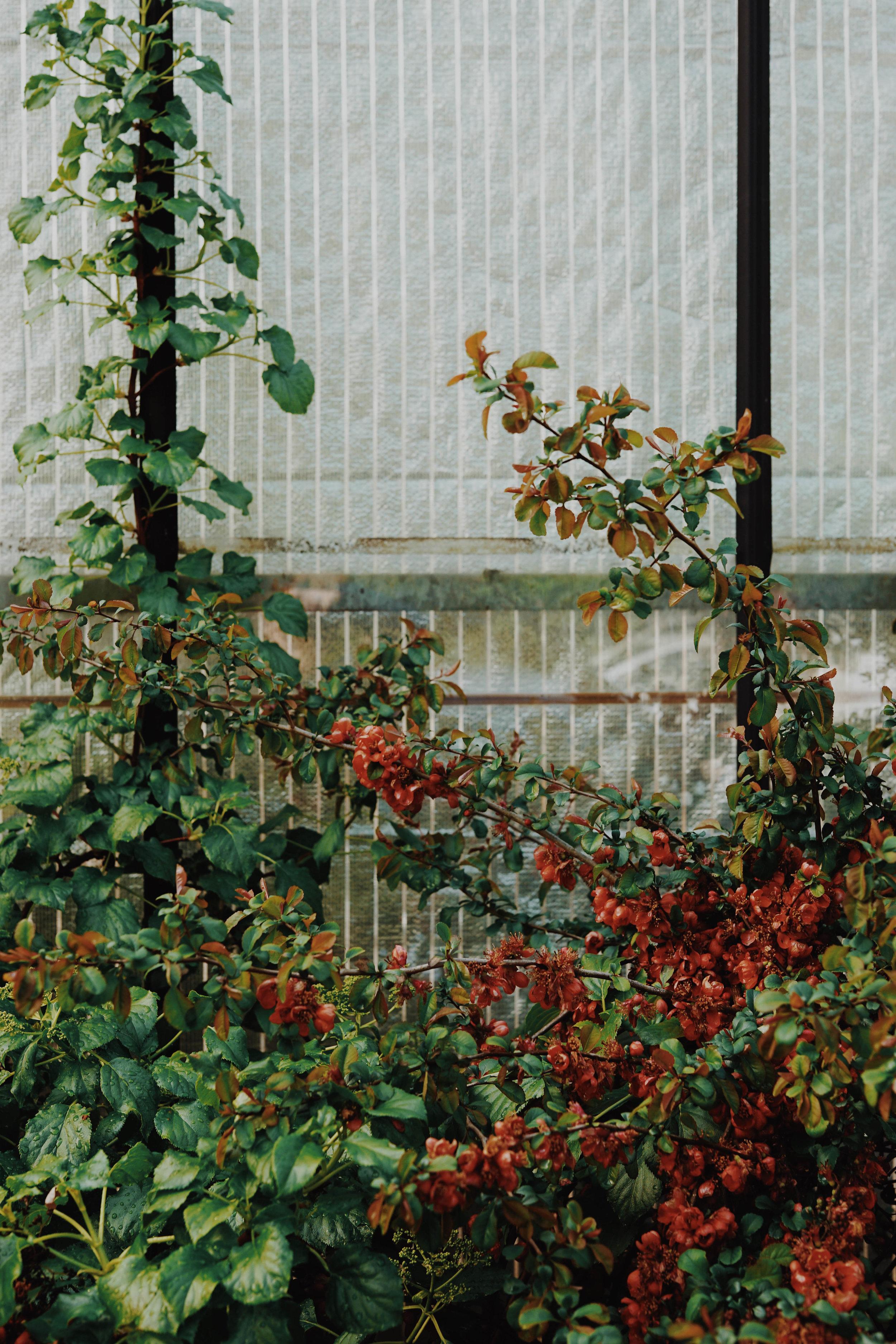 ASROSENVINGE_VisitSkane_Sweden_Backdalens_Handelstradgard_Greenhouse_Floral_LowRes-155.jpg