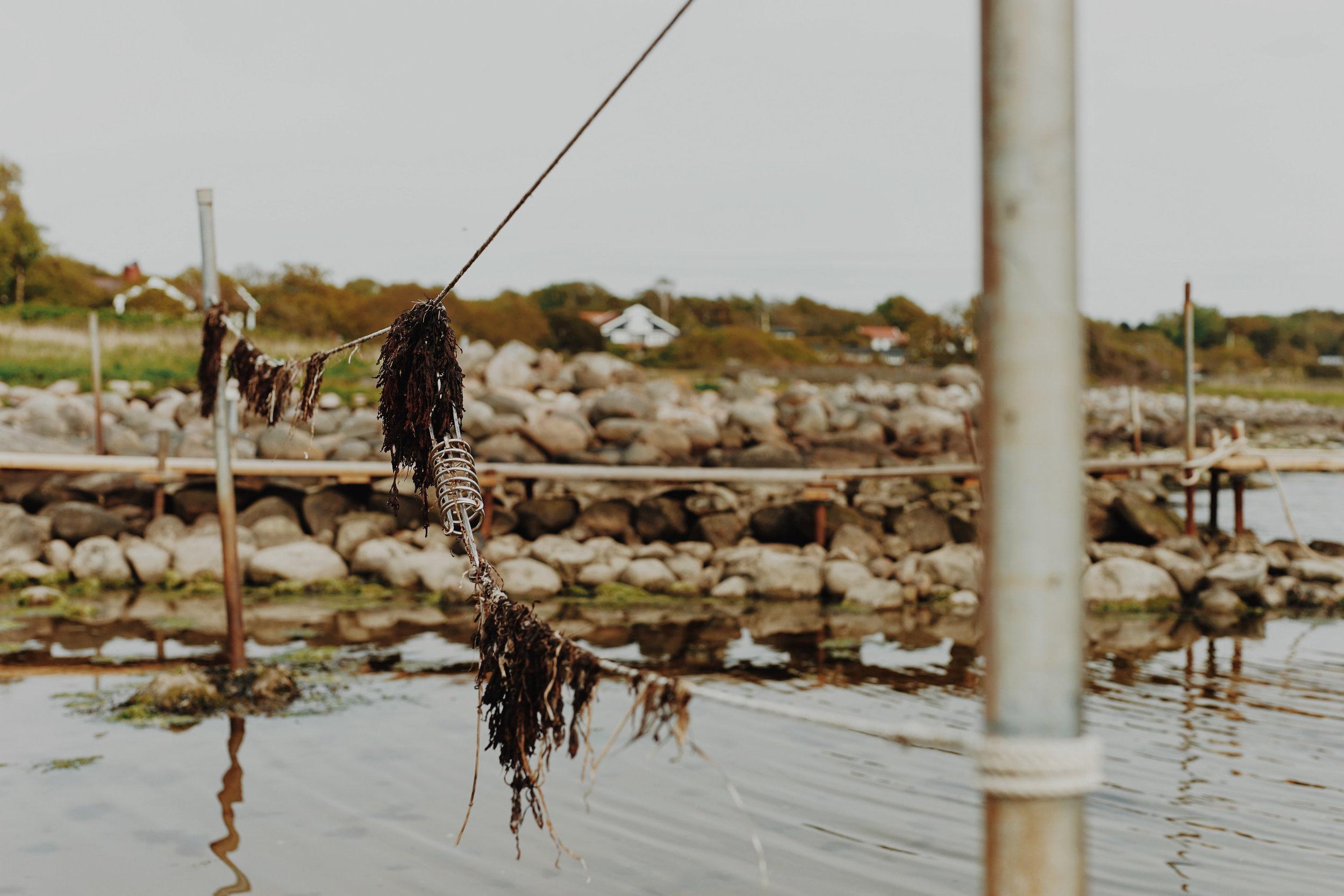 ASROSENVINGE_VisitSkane_Sweden_Vejbystrand_Harbour_Seaside_Seaweed_LowRes-182.jpg