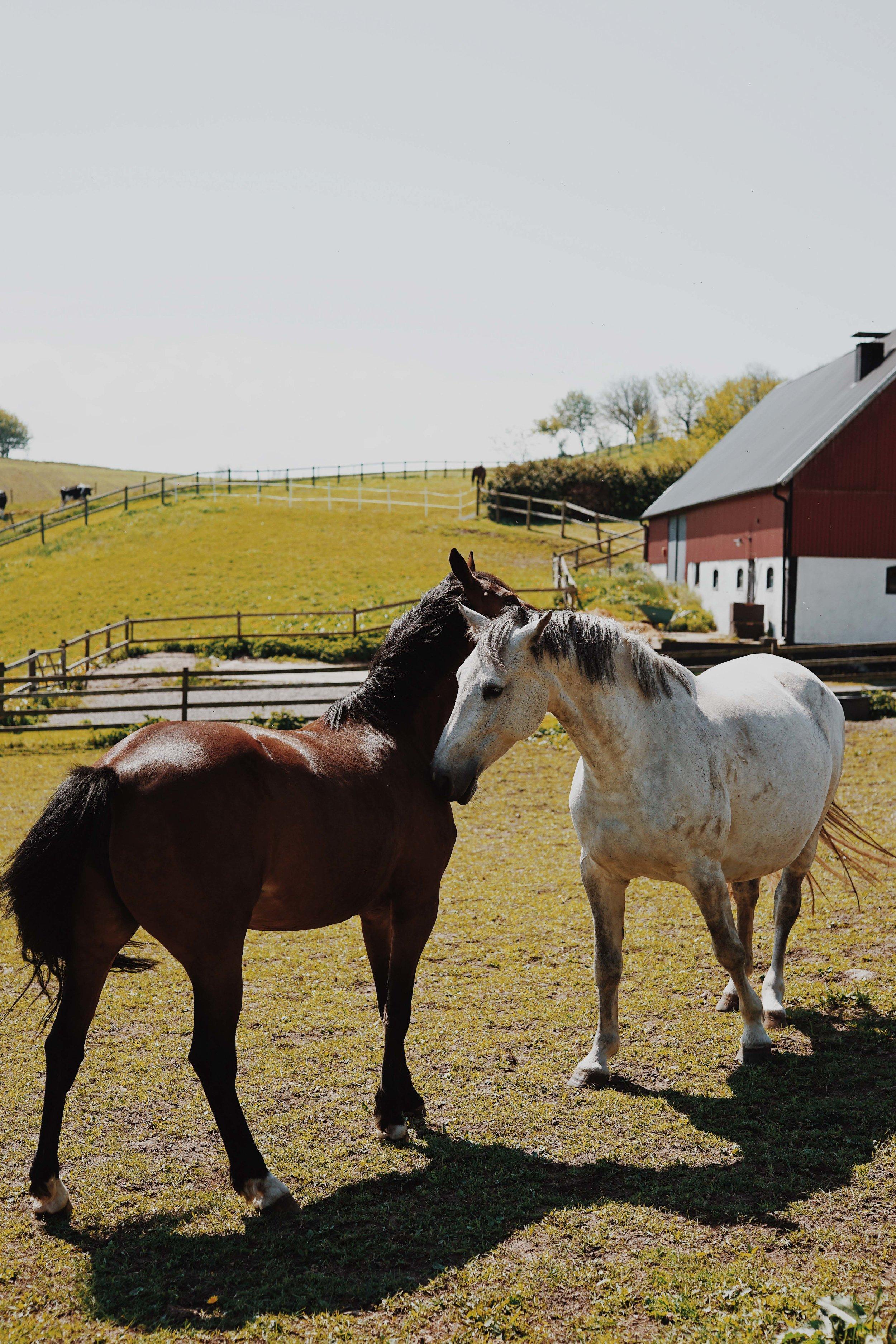 ASROSENVINGE_VisitSkane_Sweden_Horses_Field_LowRes-206.jpg