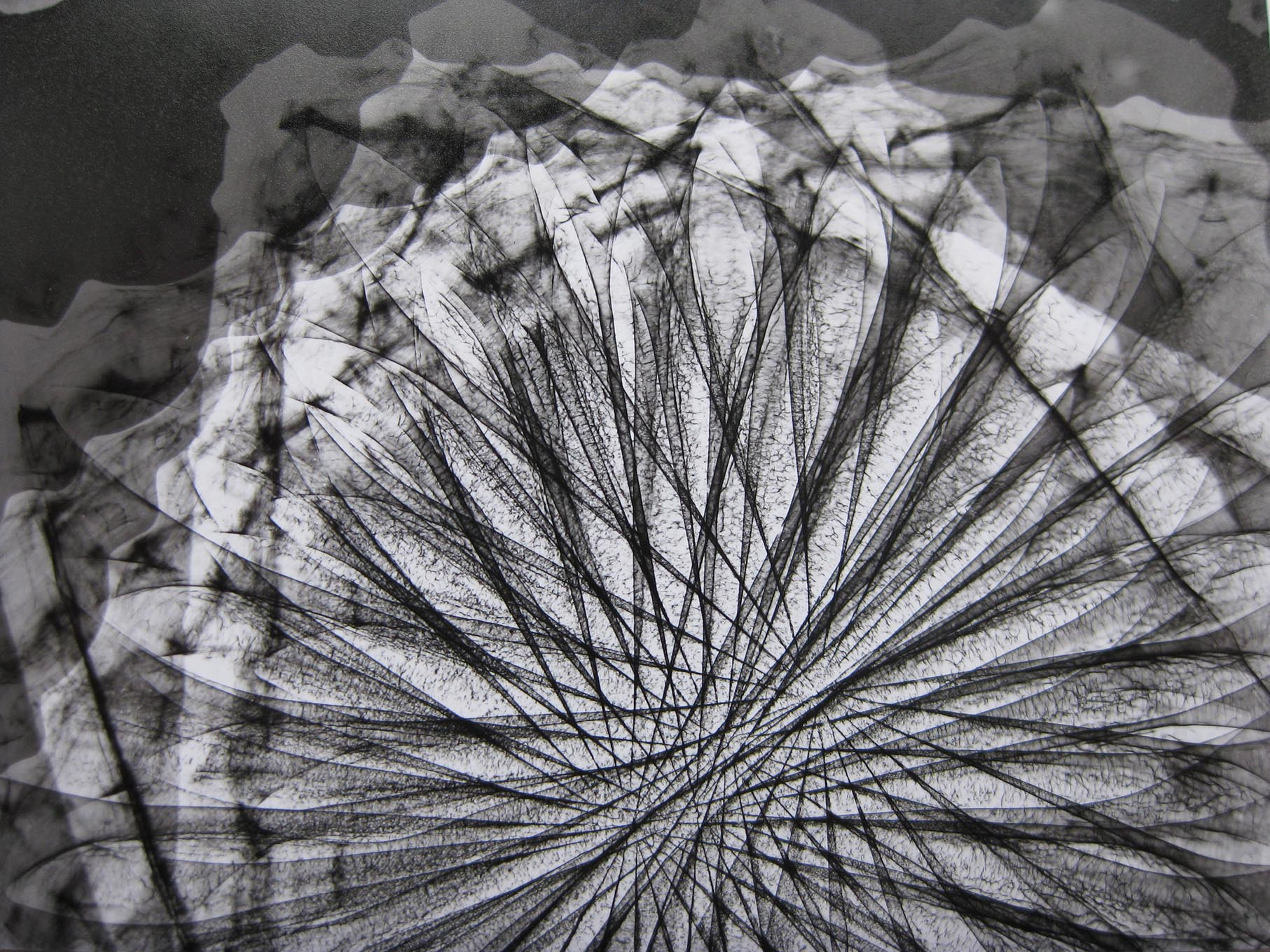 Limited Edition Print of the  X-Ray Film Series Photograms , by Rita Parniczky