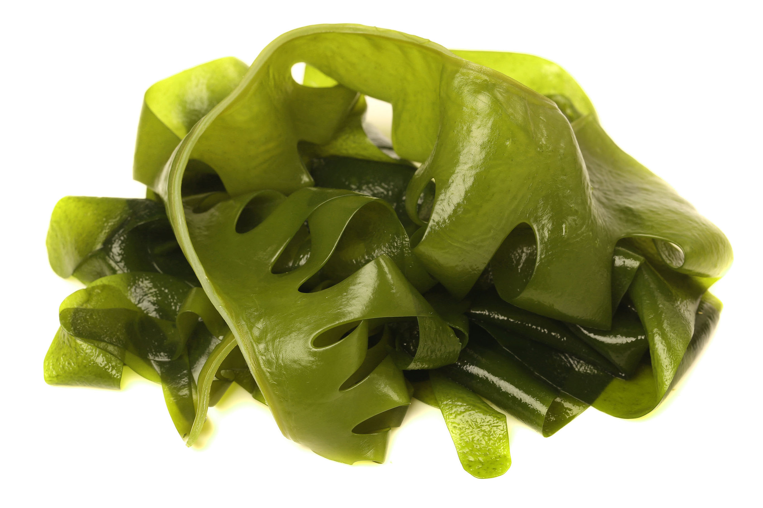 Kelp (or large Seaweed/Algae) are the source of Alginate, the biopolymer used by AlgiKnit to create their Bioyarn and bio-based textile.