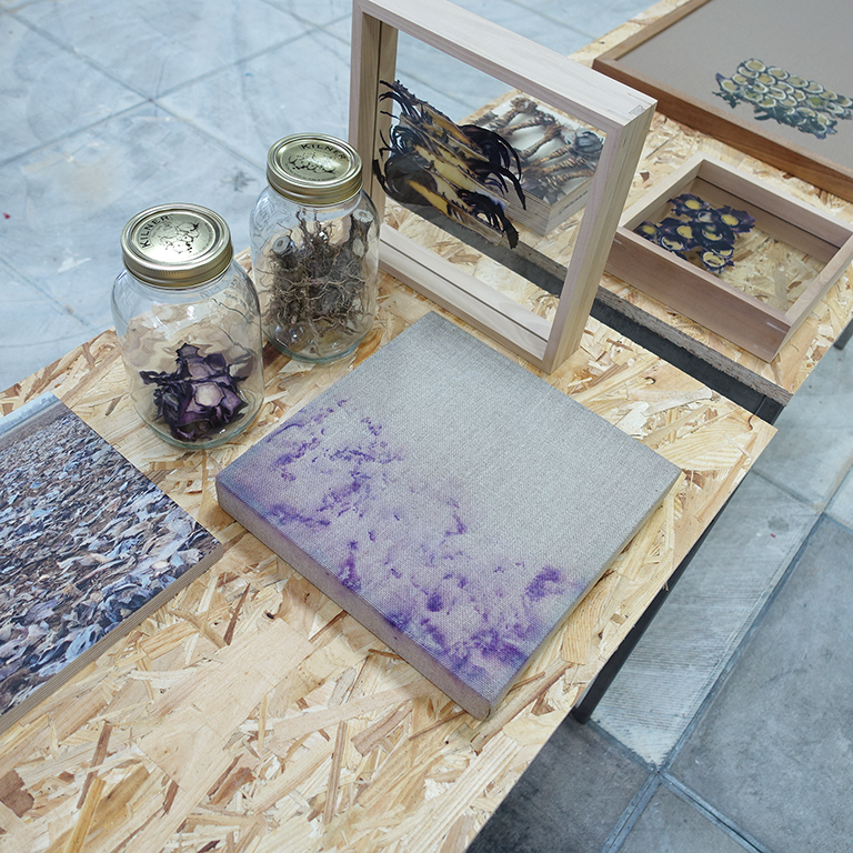 All parts of Red Cabbage, after its harvest,being employed by Angelique van der Valk as part of an installation