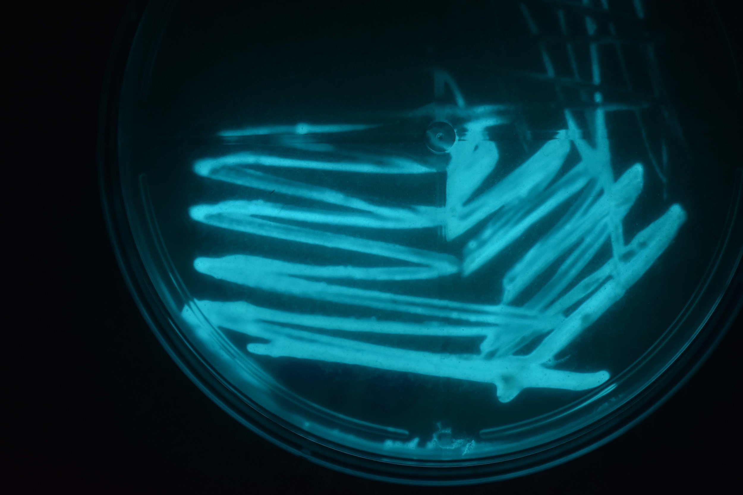 Halo bacteria, Slime mold, and Luminous bacteria (seen above) are among the biomaterials stored at the Materialenbank at BioArt Laboratories
