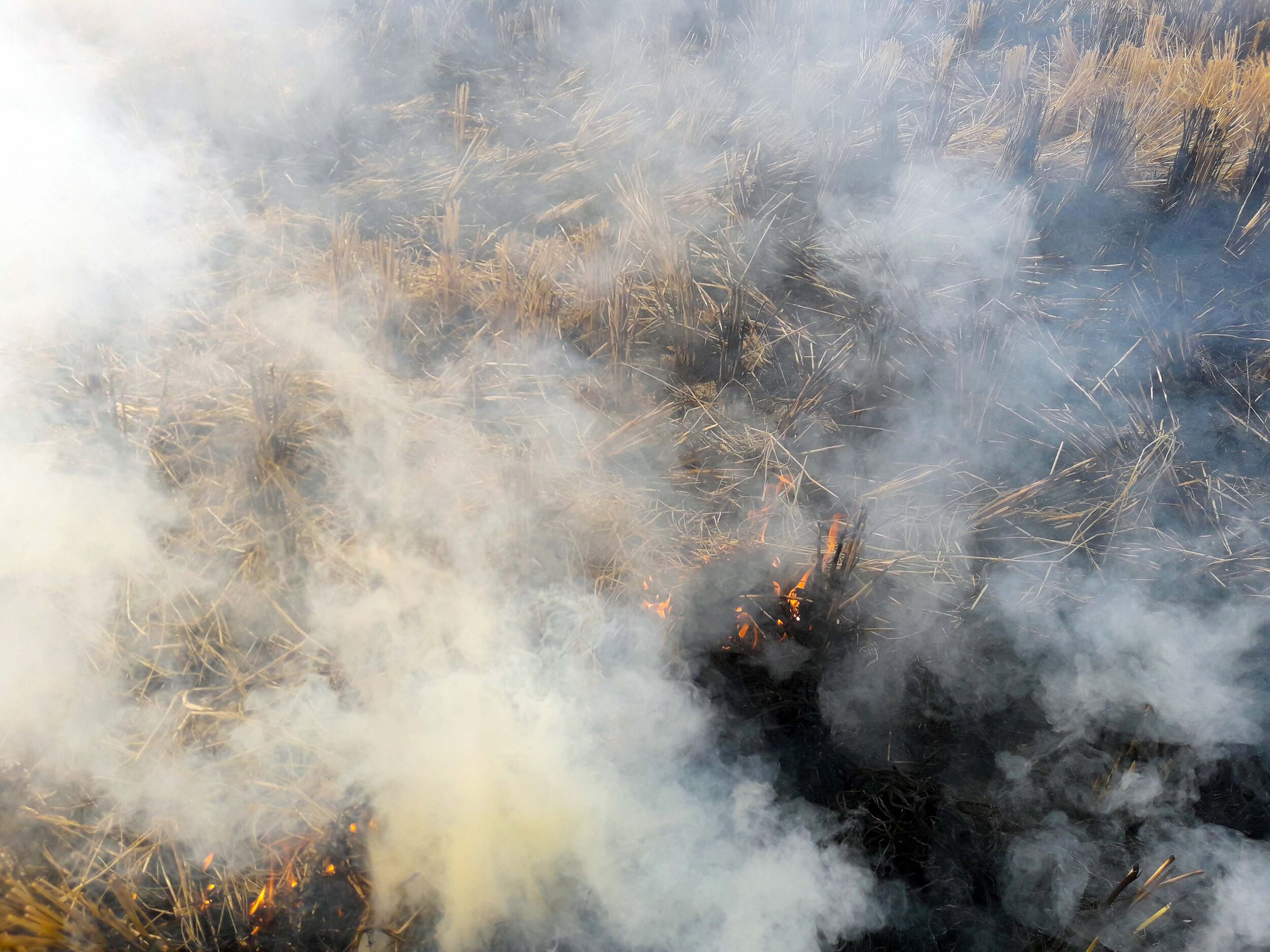A syndicate consisting of ECOR, DSM, Unilever, and IKEA, will address the challenge of burning rice crop waste by buying and transforming this waste into new materials in India.