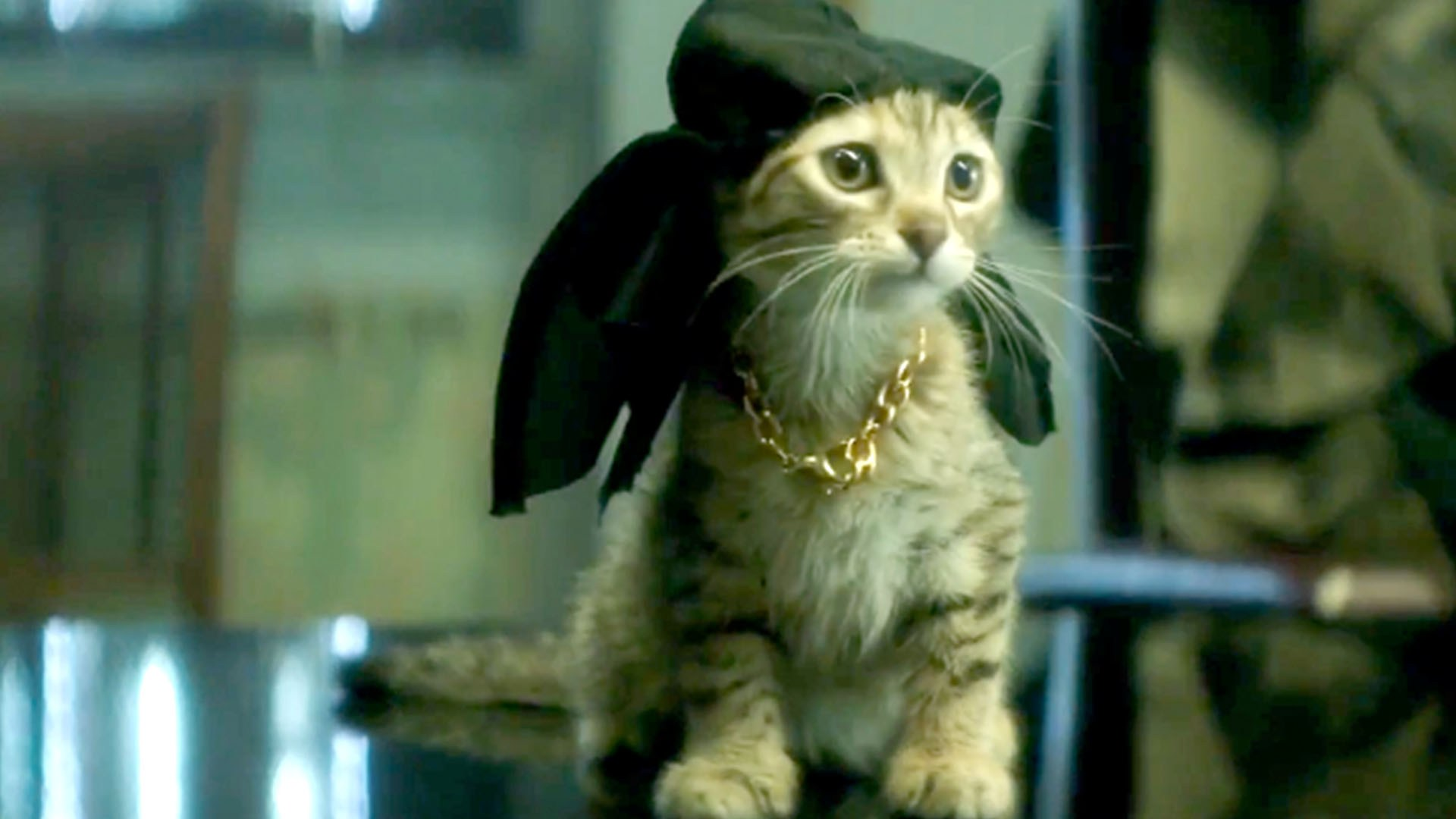 Jordan Peele, Keegan-Michael Key, and THIS KITTEN star in director Peter Atencio's  Keanu