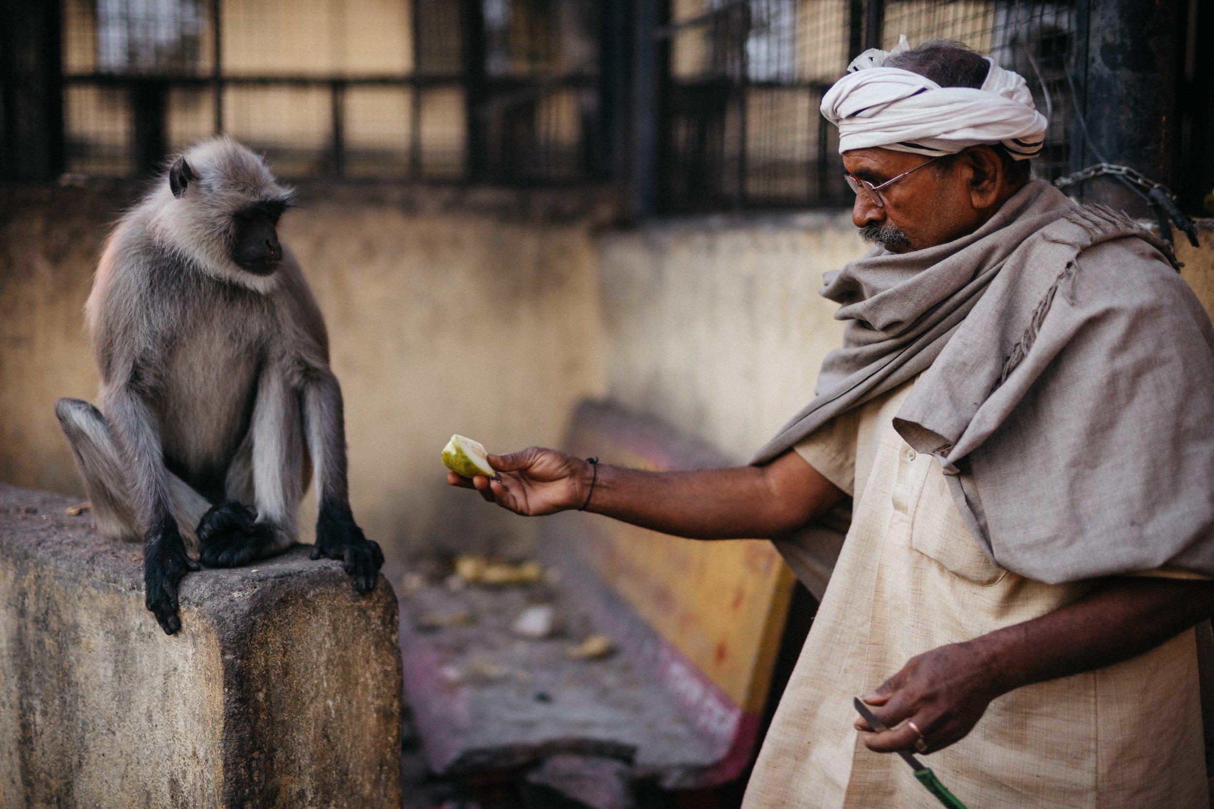 Monkey, jaipur-4.jpg
