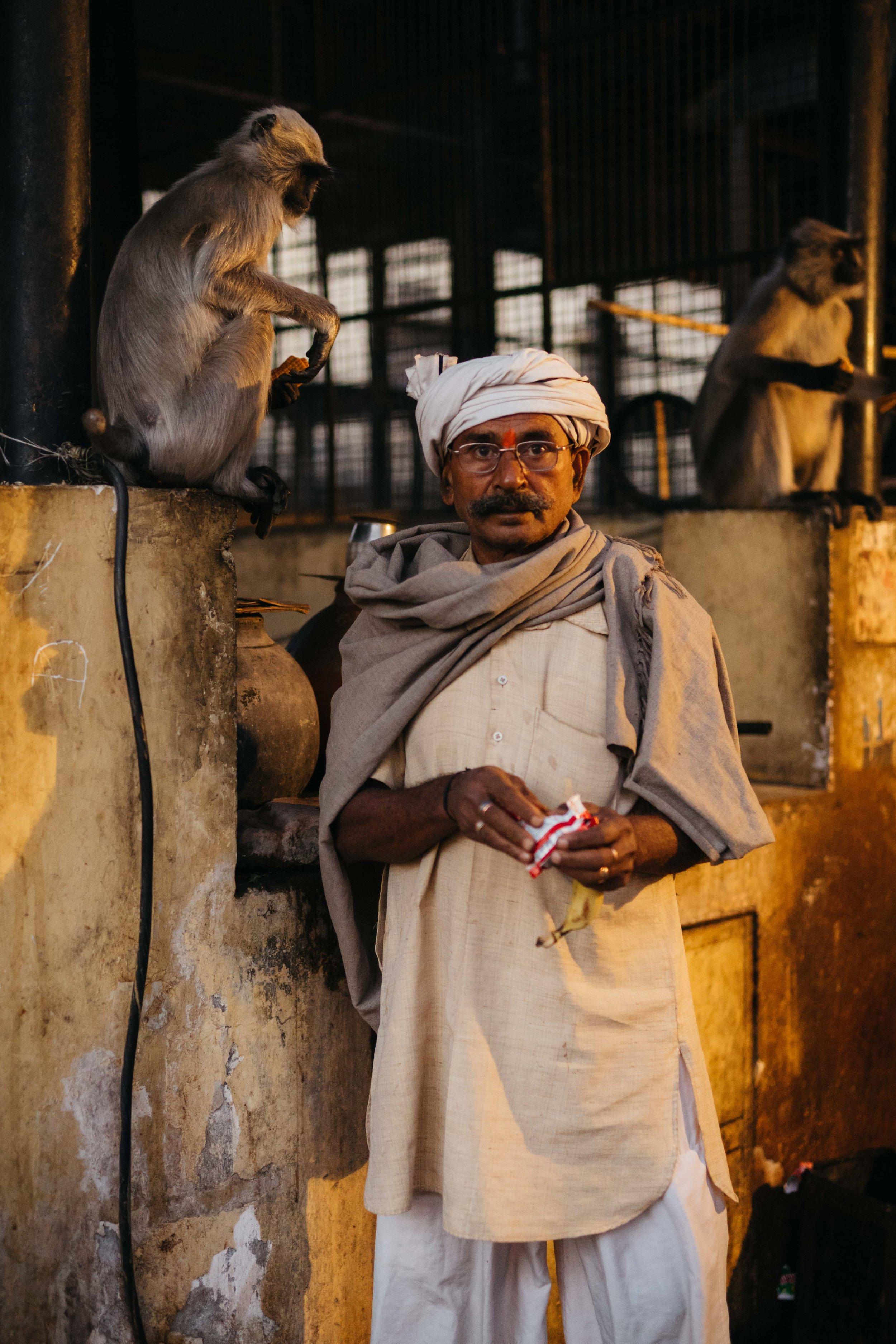 Monkey, jaipur-11.jpg
