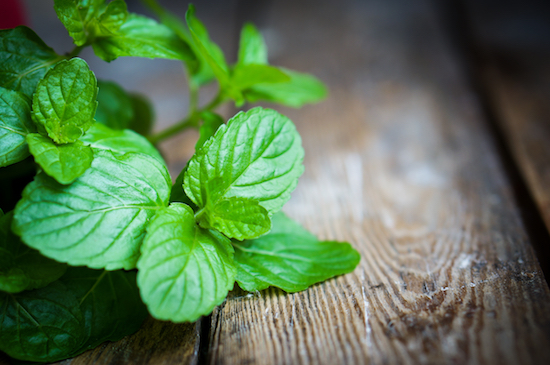 Essential oil of peppermint came in second in efficacy regarding degrading bad biofilms.