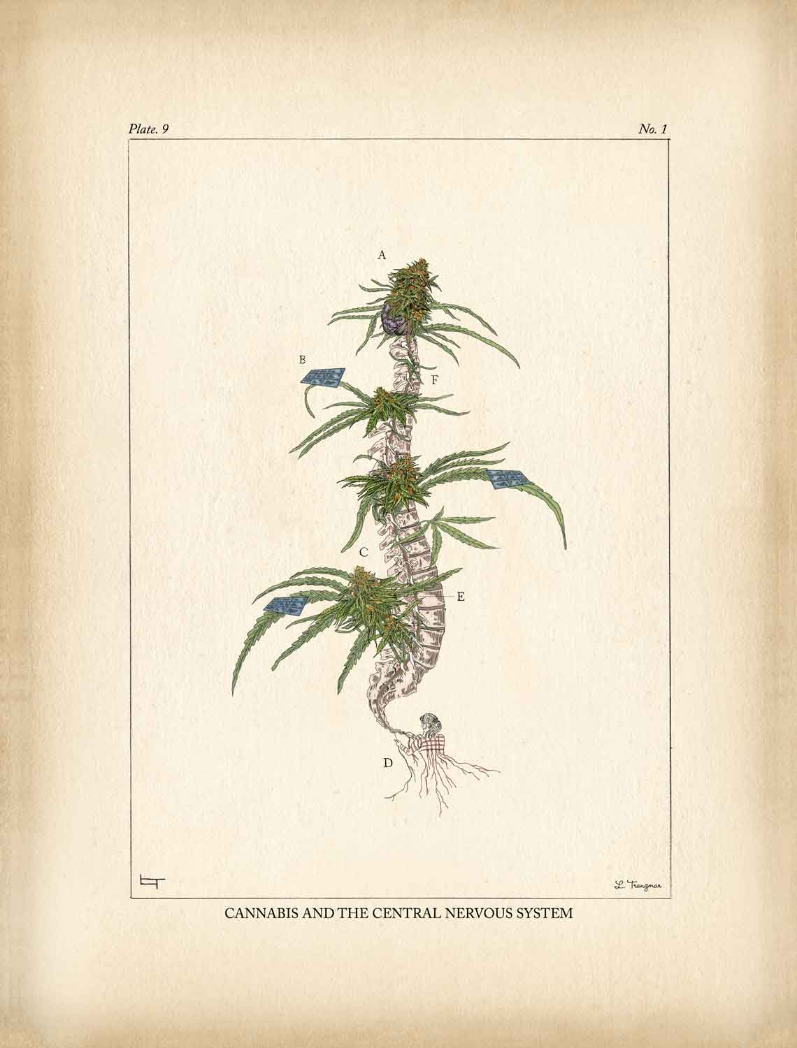Cannabis and the Central Nervous System