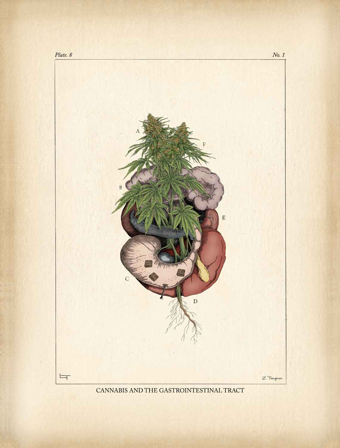 Cannabis and the Gastrointestinal Tract