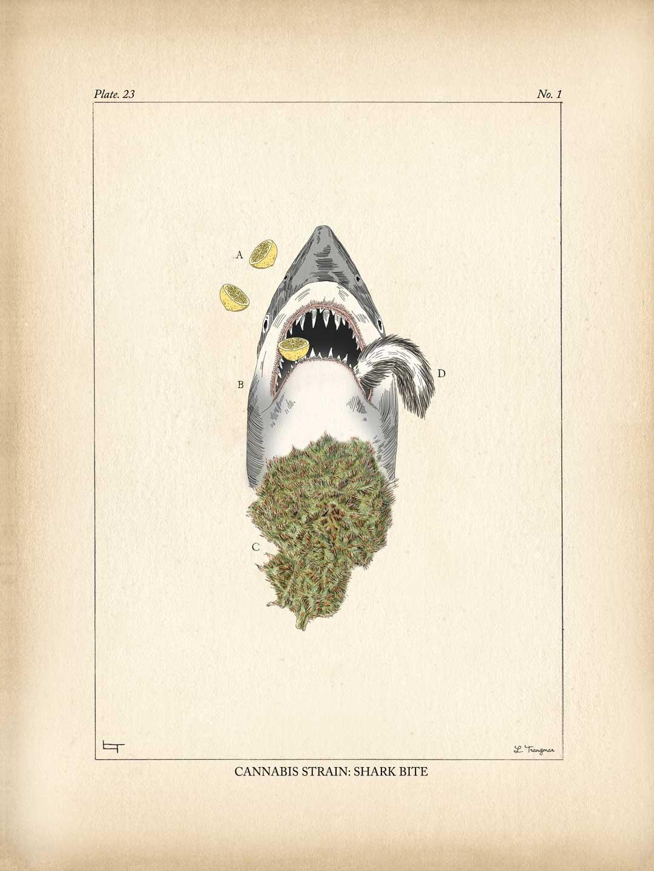 Cannabis Strain: Shark Bite