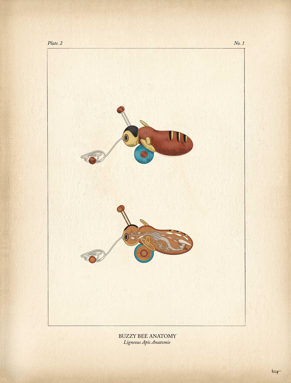 02_9x12_Bee_anatomy_w.jpg