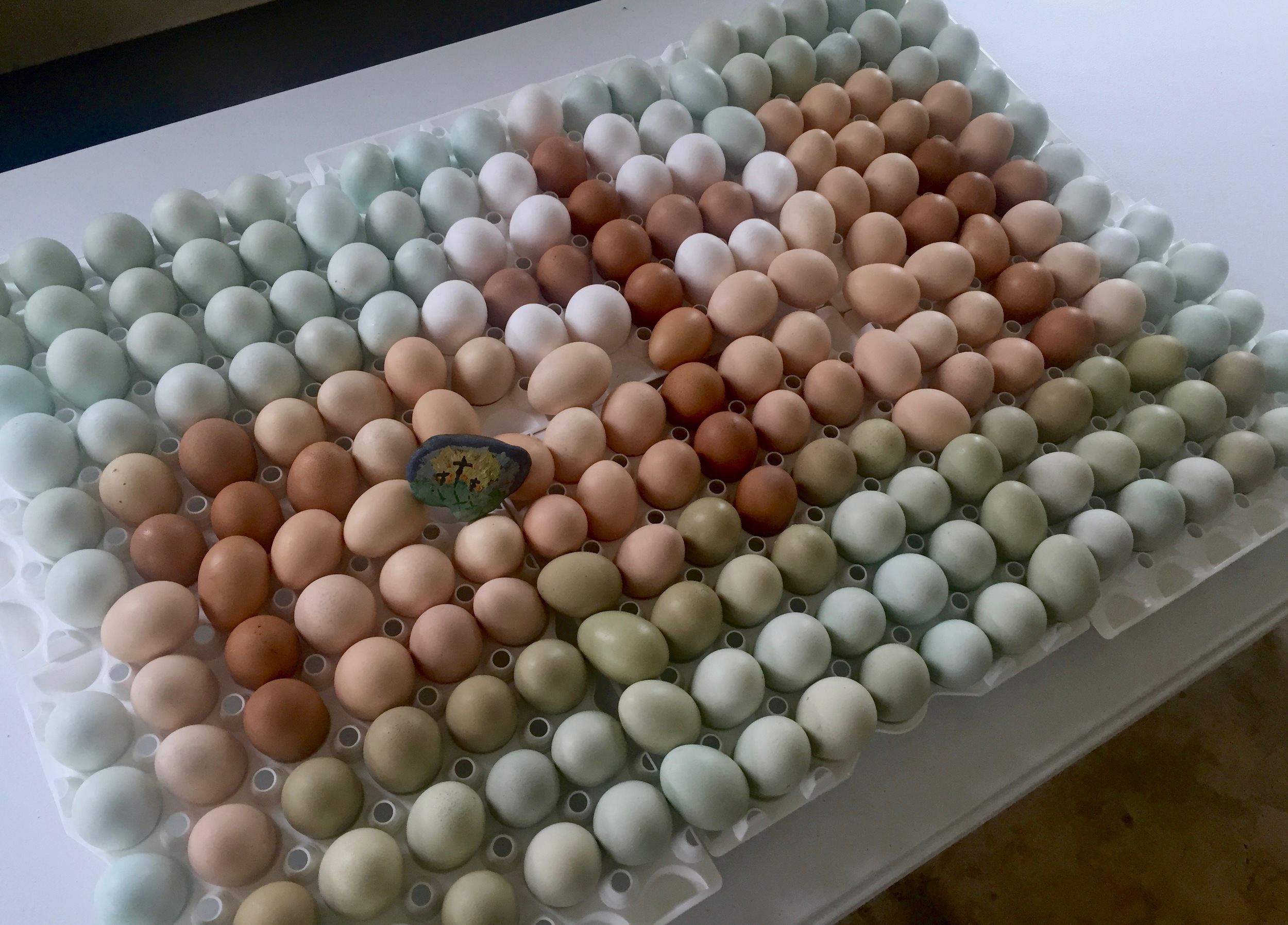 250 fresh eggs - the colors they were laid.