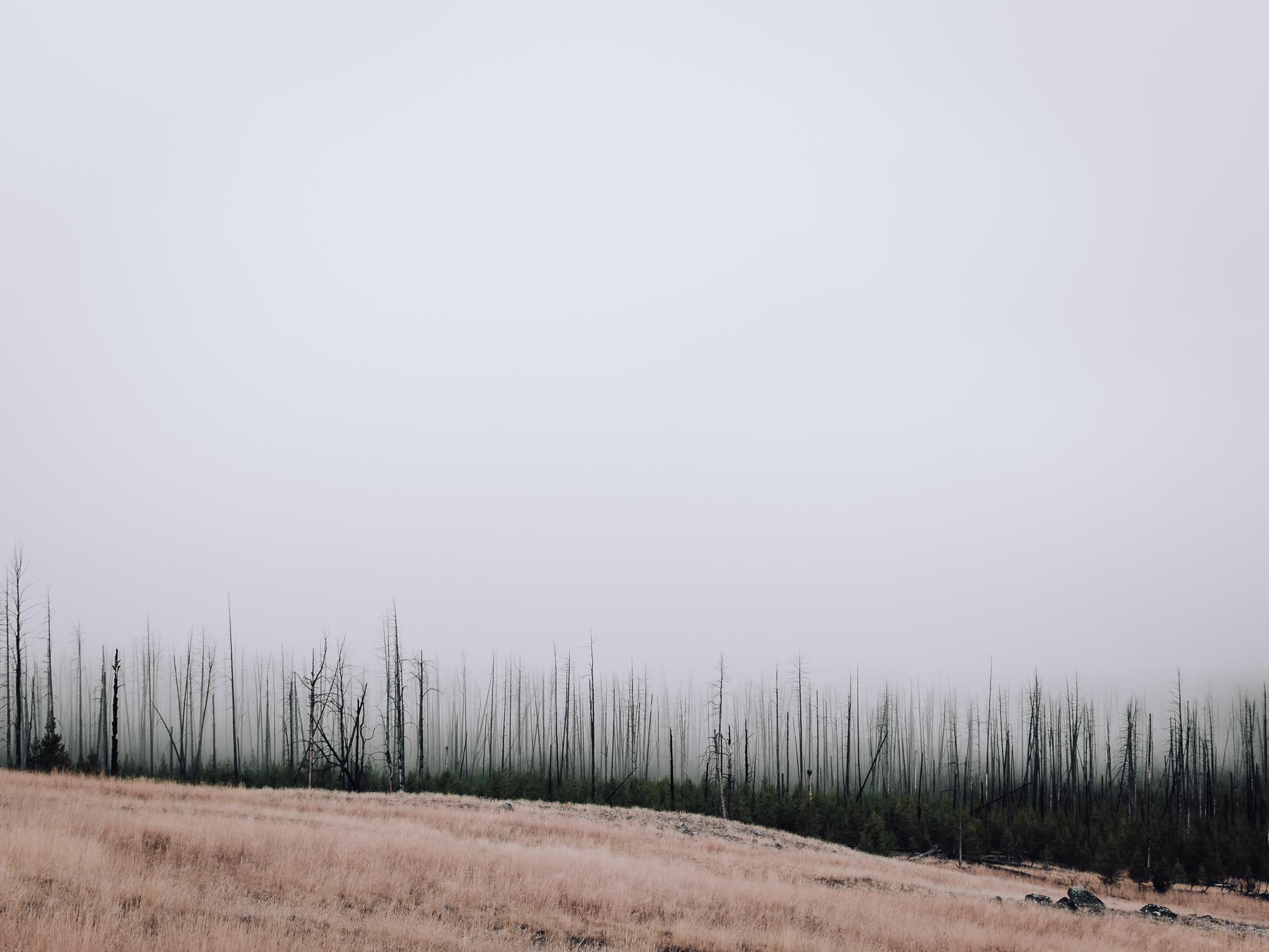 _DSF2108_ColoradoRoadTripII.jpg