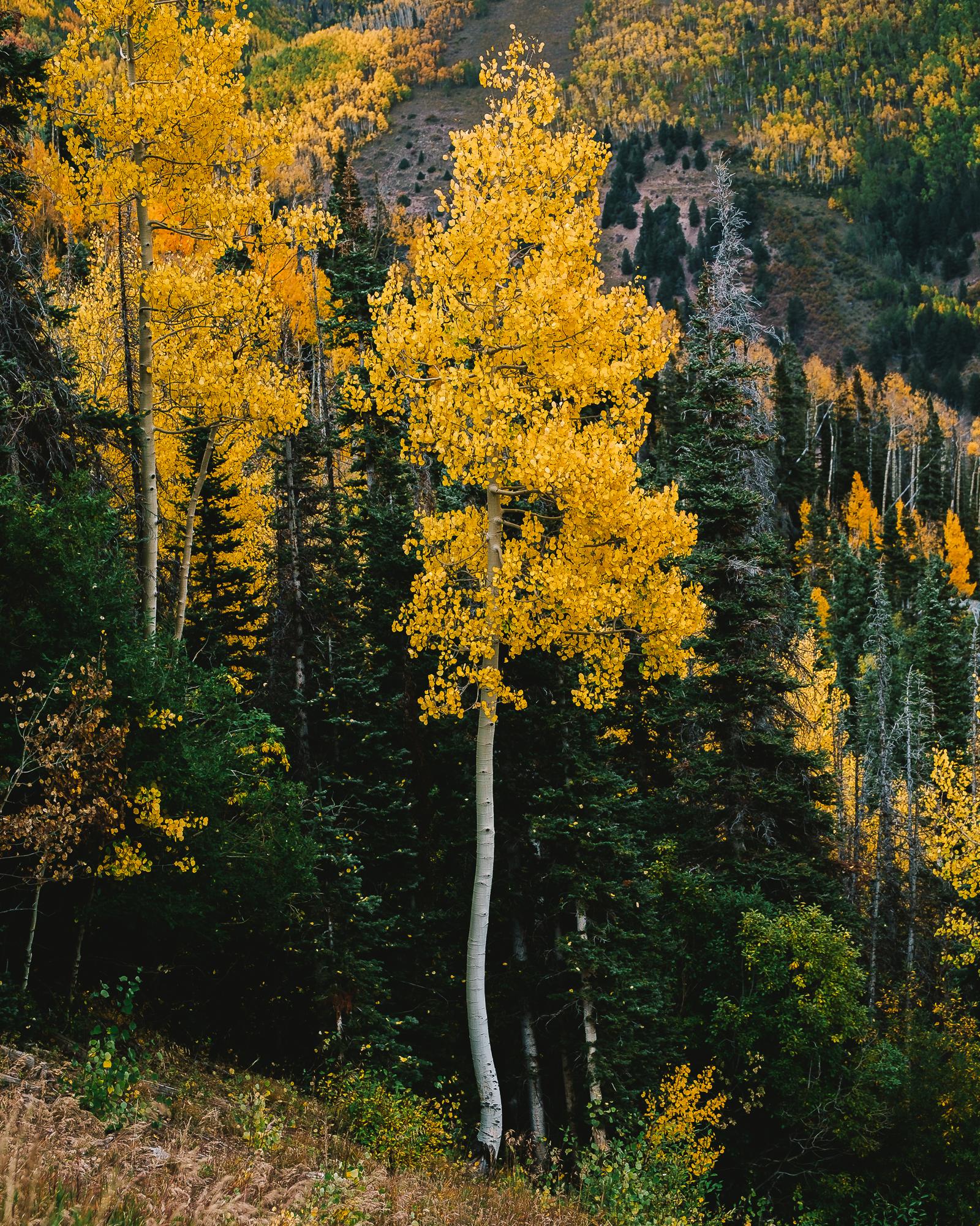 _ROB5632_Colorado.jpg