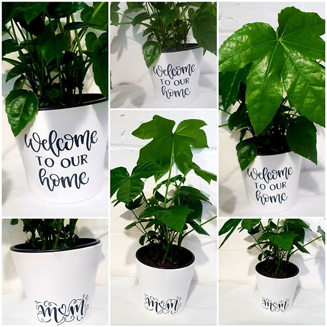 Pots with a message new to stock today. Have your own message on the pot. Ideal for Mothering Sunday or welcome to a new home.  #plant #castoroilplant #personalise #motheringsunday #mothersday #homedecor #home #walthamstowparents #athomewithplants #peaceful #walthamforest