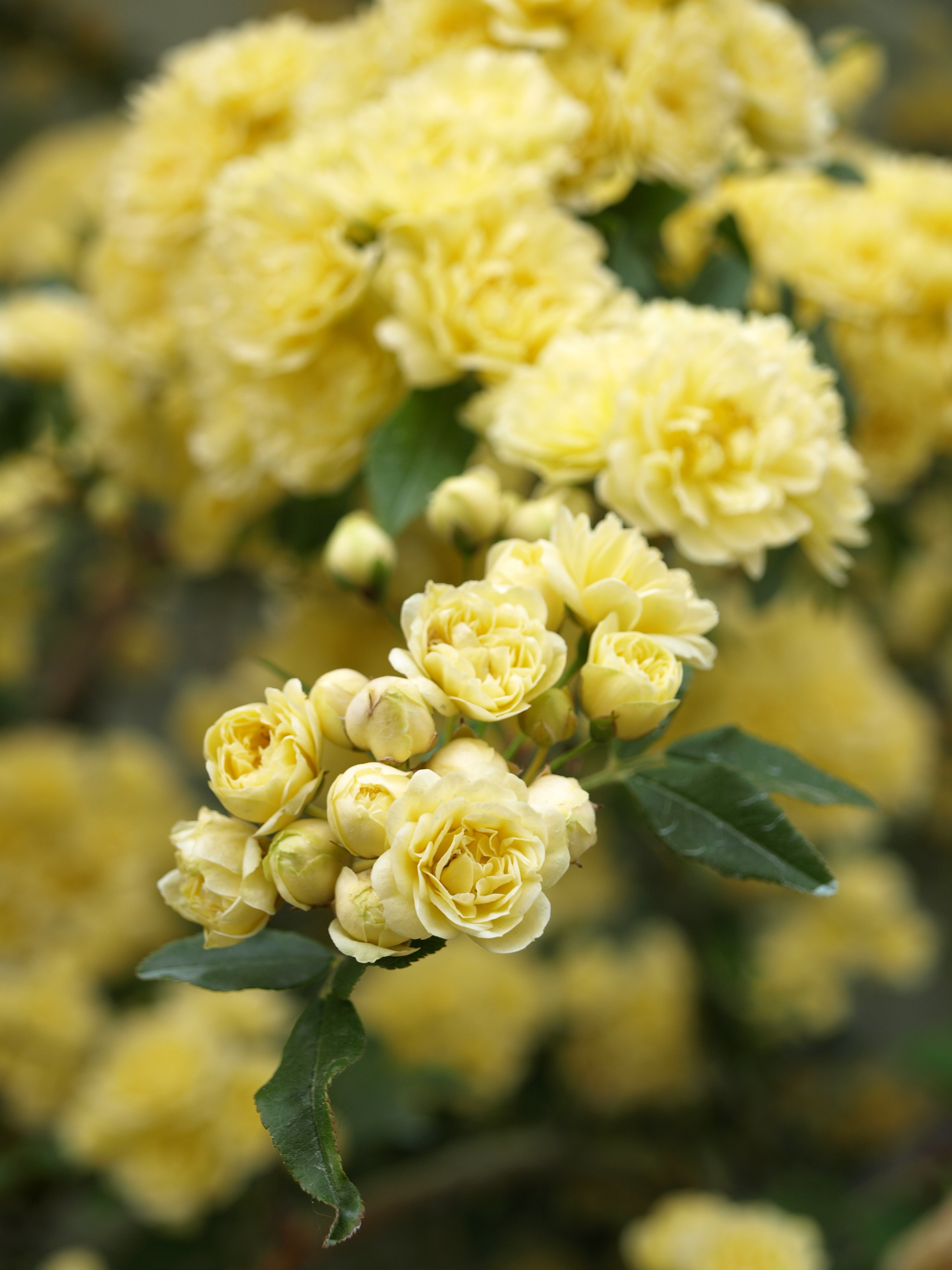 Gold Leaf Creative- Flower