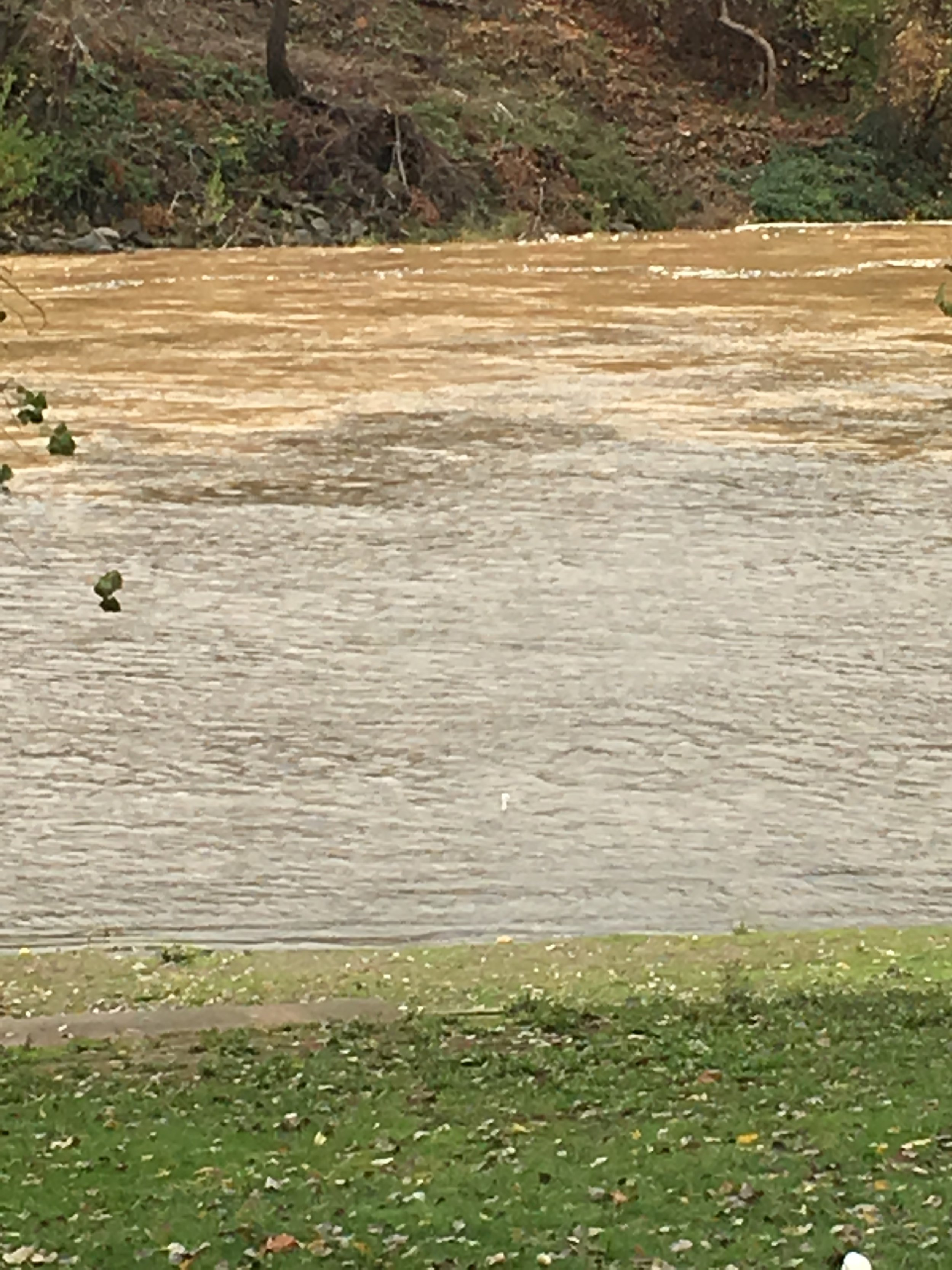 """Photo taken by Northern California salmon fishing guide Mike Rasmussen of  SalmonSacRiver.com . Photo was taken around 1:00pm in Red Bluff, Ca as the Sacramento River is rising and """"blowing out"""". This wave of water will ensure more safe passage for endangered baby Chinook Salmon."""