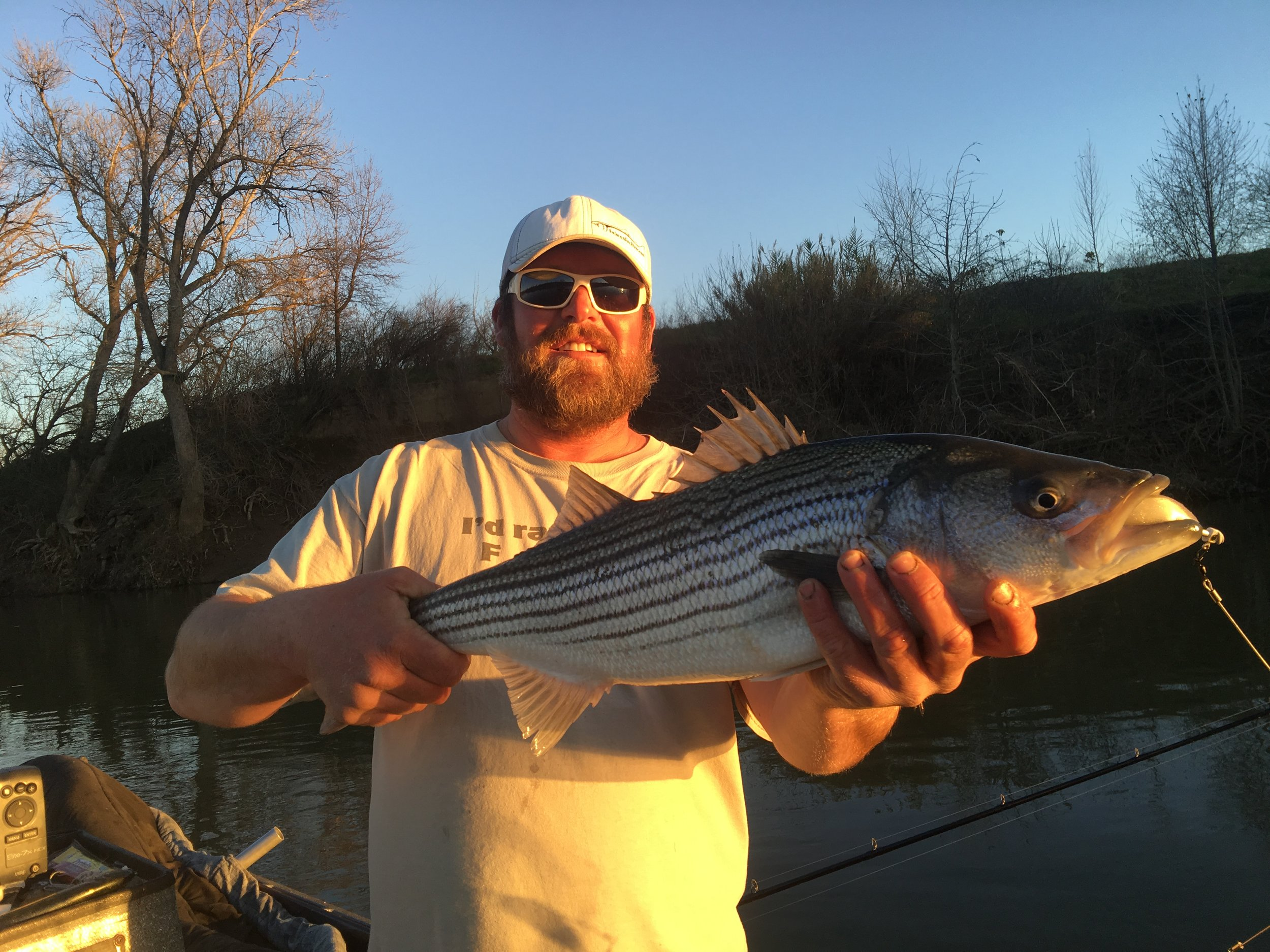 Striped Bass Fishing Guide Mike Rasmussen holds up a double digit striped bass he caught on December 30, 2016.   Mike's Fishing Guide & Charter Service For Sacramento River Fishing targeting King Salmon, Sockeye Salmon, Striped Bass, Sturgeon, Shad And Trout the best Sacramento River Fishing guide and Sacramento River Charter on Sac River  Mike's Fishing Guide & Charter Service For Sacramento River Fishing targeting King Salmon, Sockeye Salmon, Striped Bass, Sturgeon, Shad And Trout the best Sacramento River Fishing guide and Sacramento River Charter on Sac River