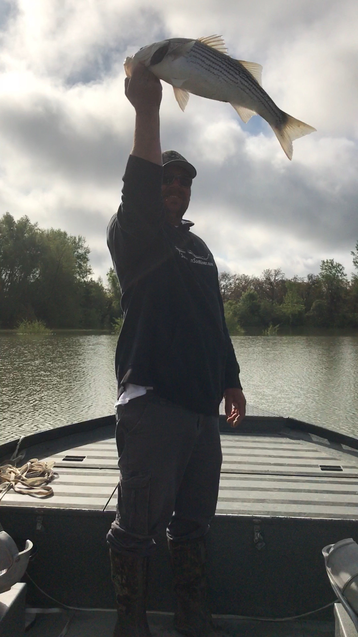 A quality striped bass caught by  salmonsacriver.com striped bass fishing guide Mike Rasmussen on the Sacramento River in Colusa, Ca on April 18, 2017 while trolling broken back Yo-Zuri lures.
