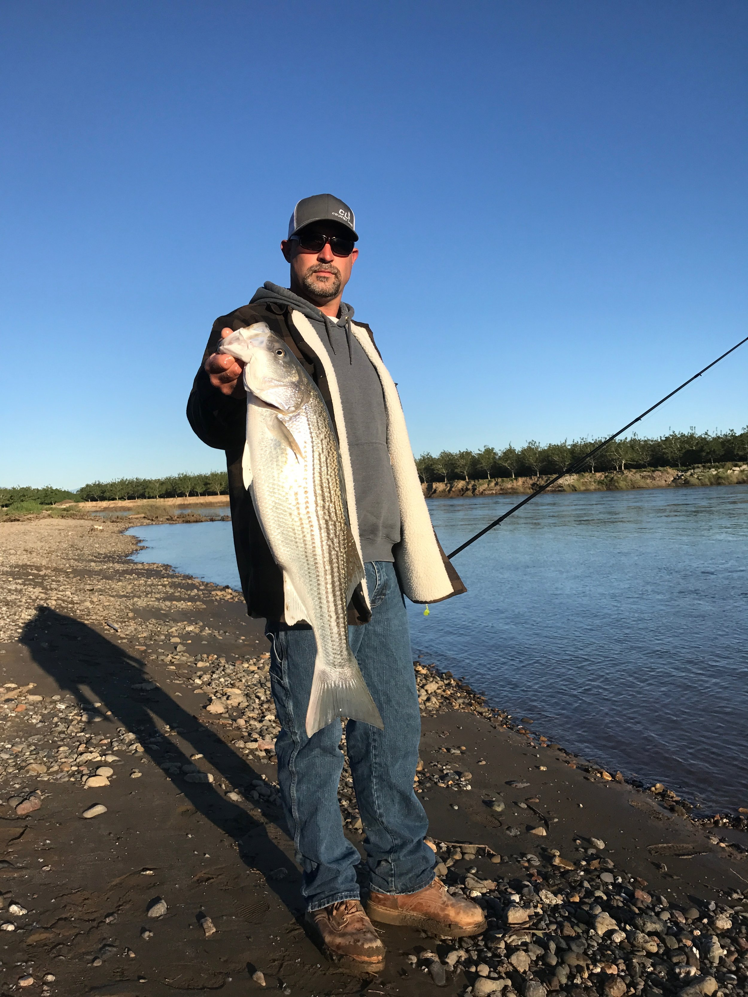 Robert Petty holding a hefty striped bass he caught from the bank while deck handing with Mike Rasmussen of  SalmonSacRiver.com  on April 29, 2017 on the Sacramento River.