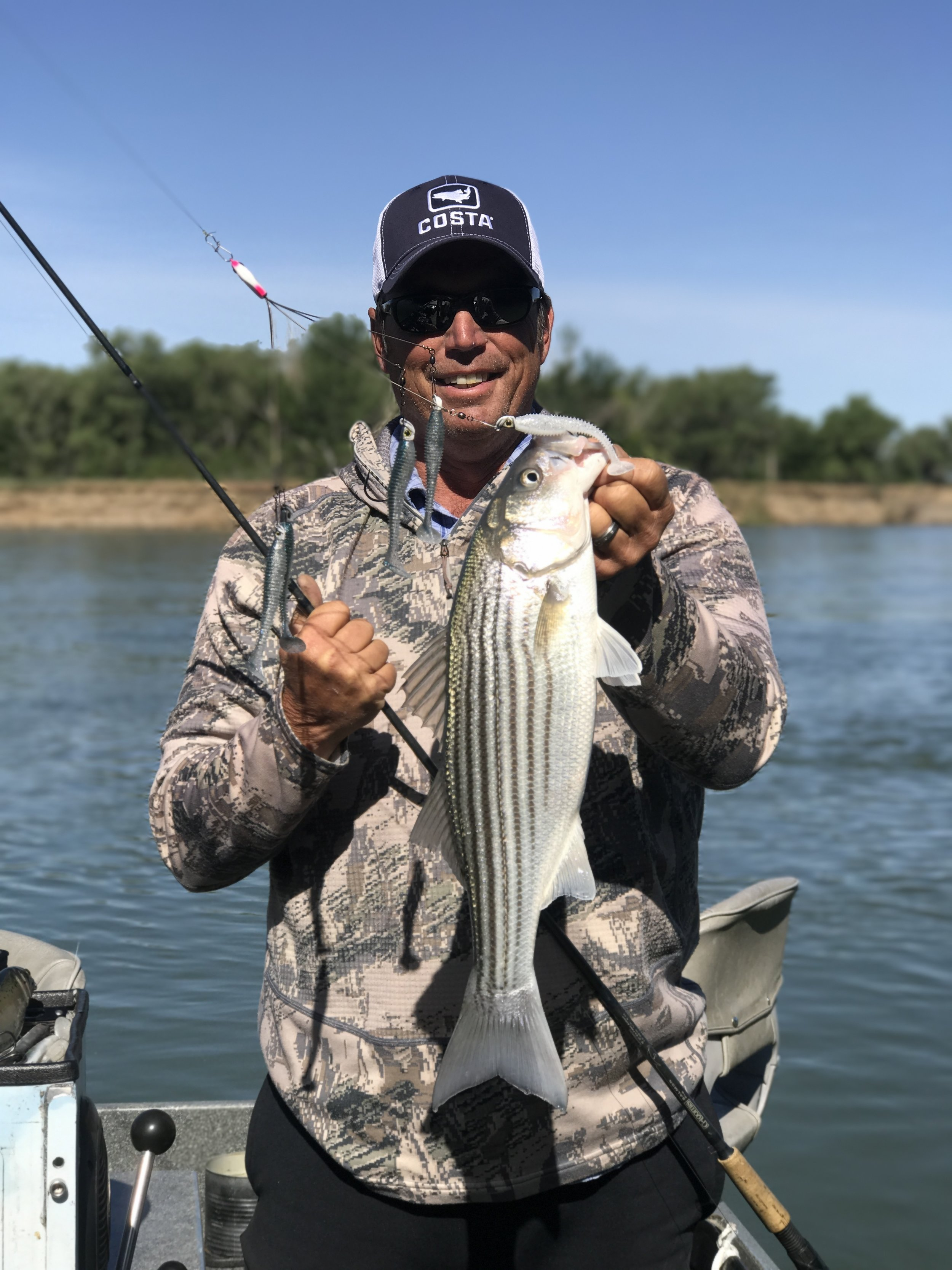 Northern California Striped Bass fishing guide Dave Jacobs  sacramentofishing.com  holds a chunky post spawn striped bass he caught on the Sacramento River near Woodson Bridge in Corning, Ca on May 18, 2017.