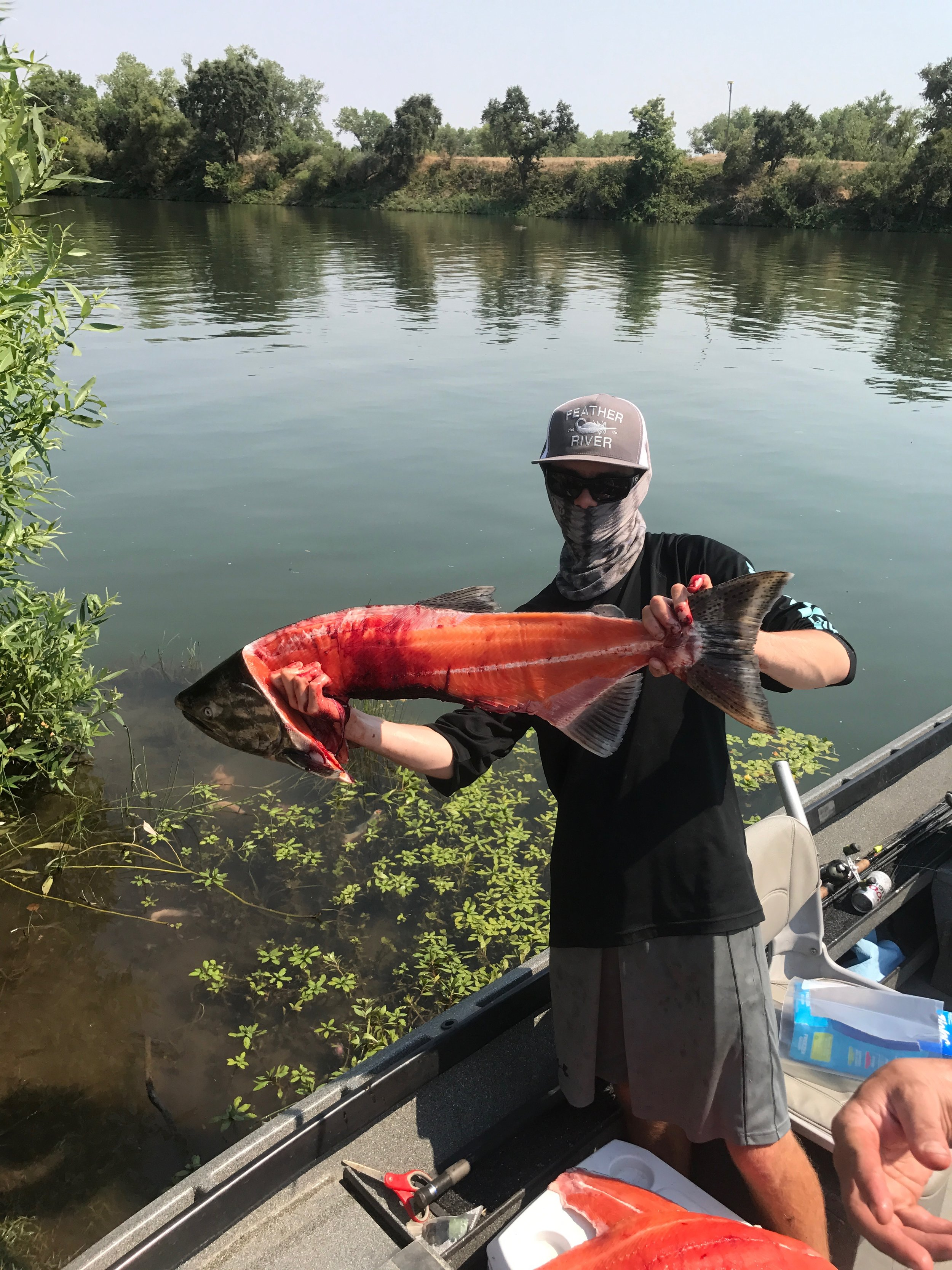 Quality king salmon being caught on the Feather River