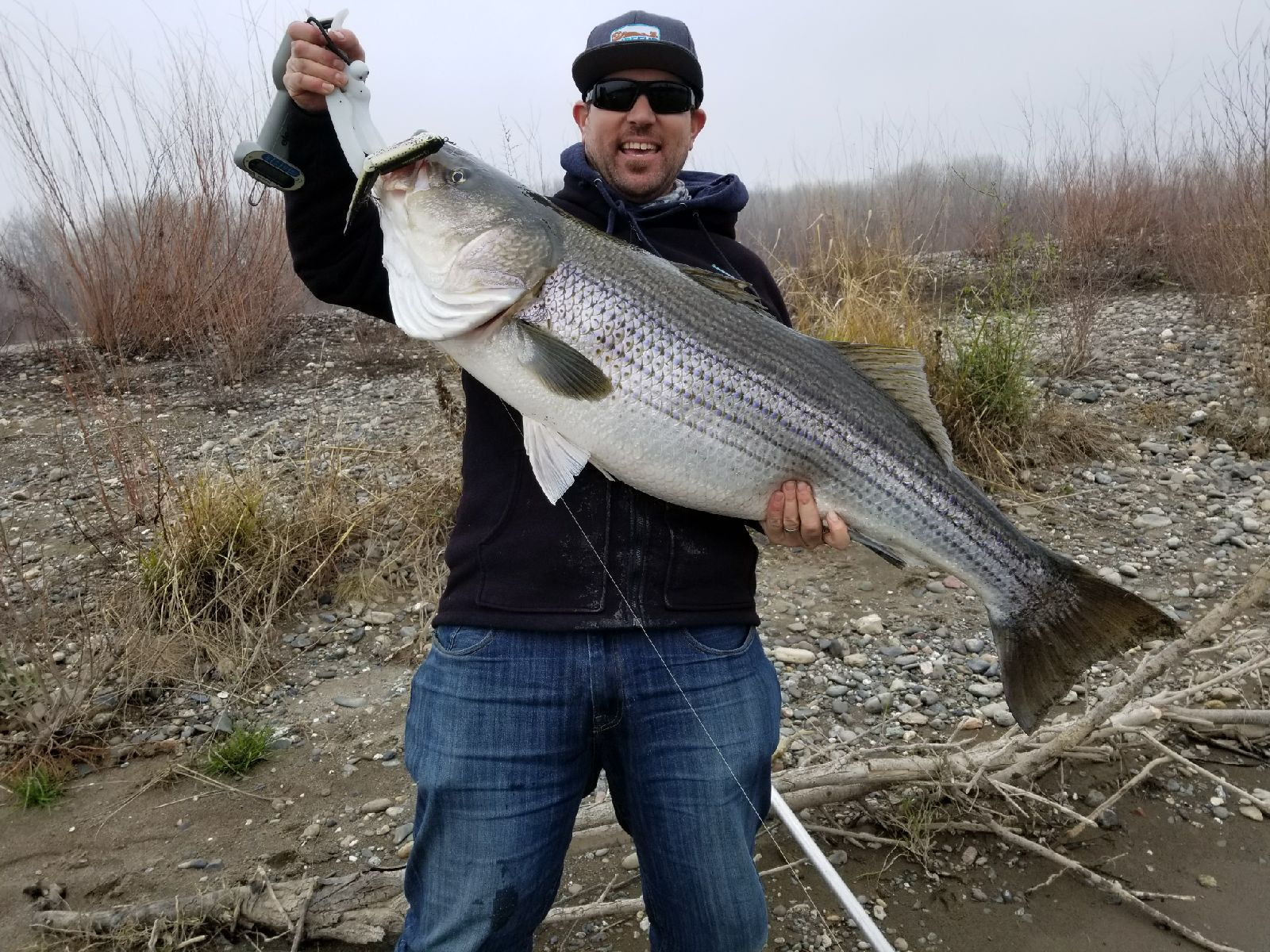 "Pual Young aka ""Aquaman"", hold a 44 pound hog striped bass he caught this week on the Sacramento River. Paul is a recreational fishermen who has turned in a 53 pound river monster and a 40 pound trophy class striped bass in addition to the 44 pound striper pictured above."