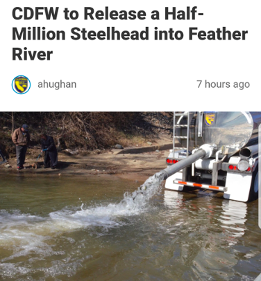 The release of steelhead juveniles into the Feather River at Boydes Pump boat launch facility near Yuba City, Ca.